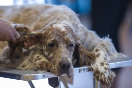 nternational Dog Grooming Championships