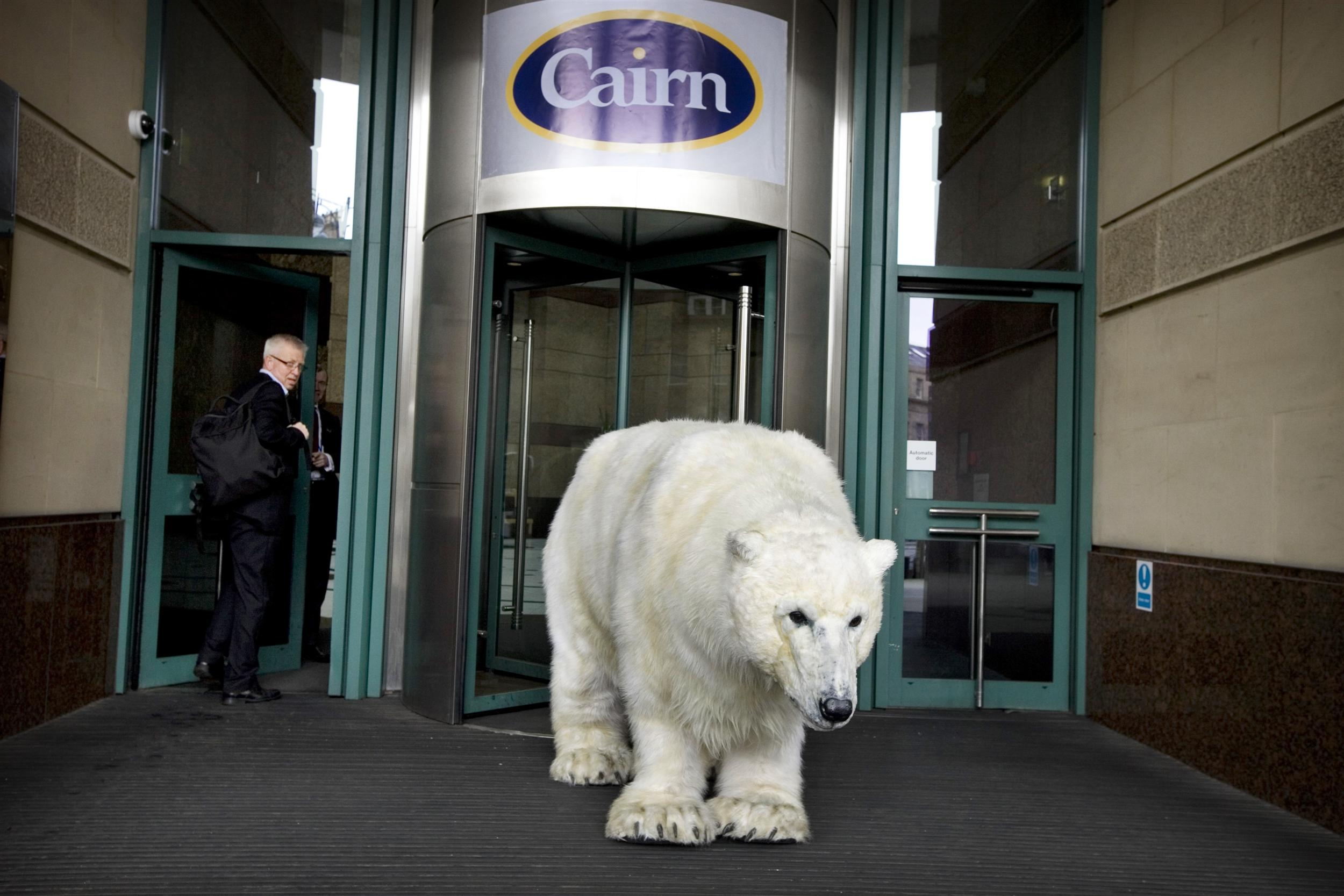 Life-sized polar bear outside Cairn's office