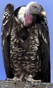 Vulture funds... face having their wings clipped