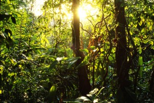 Rainforest in Panama