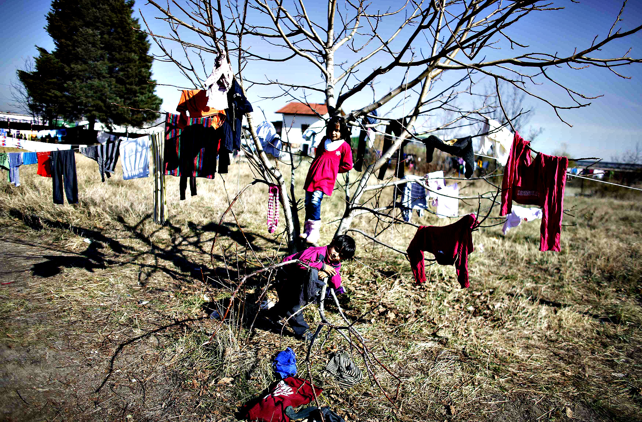 Syrian children play on a tree as they wait for the distribution of food outside a refugee centre in Sofia October 29, 2013.