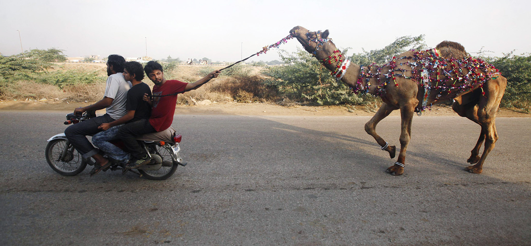Men ride on a motorcycle while leading a recently purchased camel ahead of Eid al-Adha celebrations on the outskirts of Karachi October 15, 2013. Muslims across the world celebrate the annual festival of Eid al-Adha or the Festival of Sacrifice, which marks the end of the annual hajj pilgrimage, by slaughtering goats, sheep, cows and camels in commemoration of the Prophet Abraham's readiness to sacrifice his son to show obedience to Allah. Eid al-Adha in Pakistan falls on October 16. REUTERS/Athar Hussain