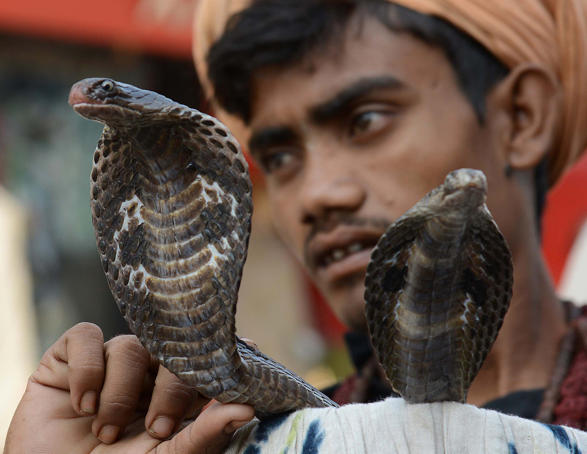 An Indian snake charmer poses with his cobras as he waits for alms from devotees outside a temple in Amritsar, ahead of the Hindu festival of Diwali.