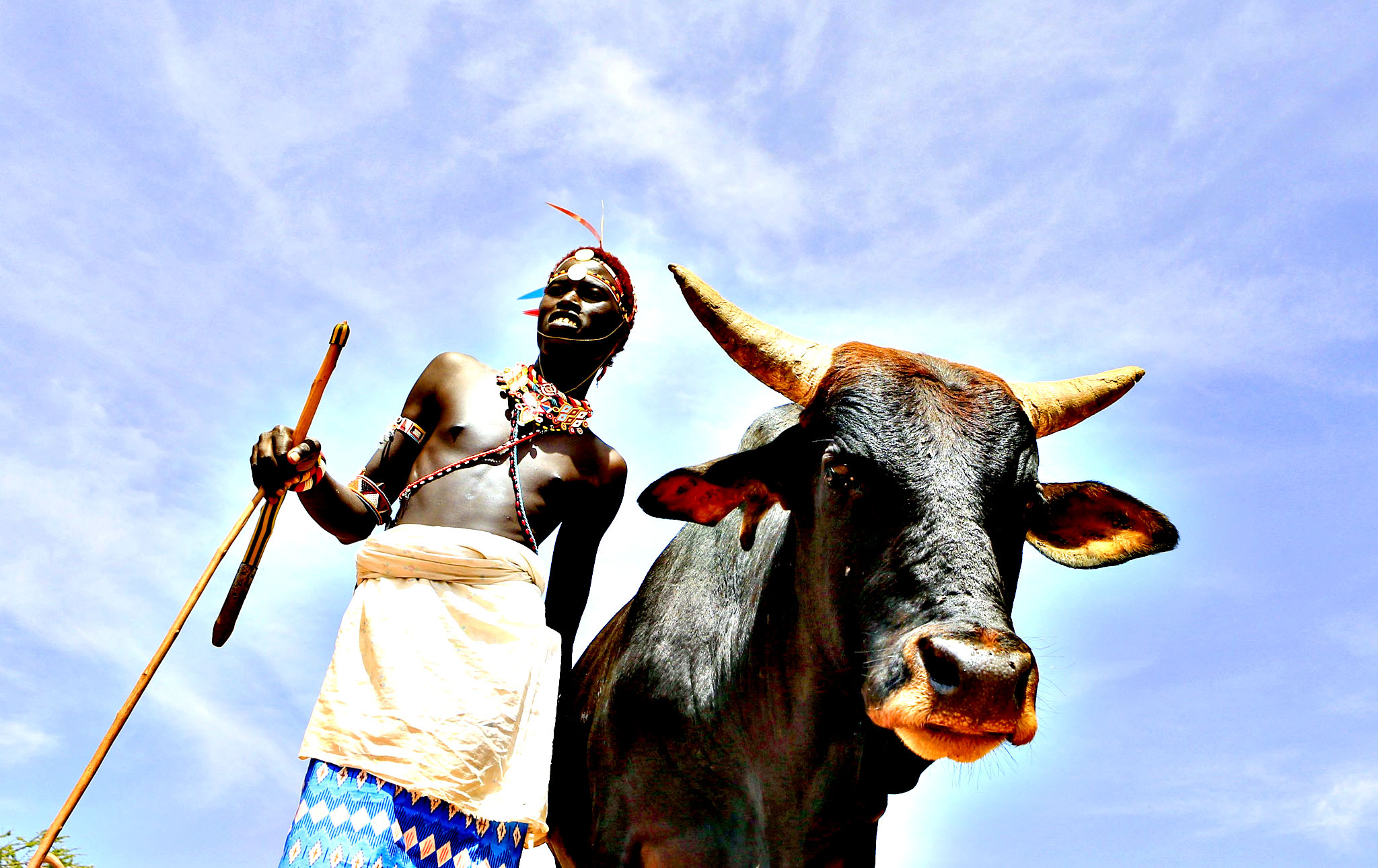 A Samburu moran stands next to a fattened black bull in the remote northern Kenya village of Wamba in Samburu November 21, 2013. British High Commissioner to Kenya, Christian Turner, will accept the bull from the Namunyak women's group during a ceremony to bless and celebrate the birth of Britain's Prince George. Prince George is the son of Britain's Prince William and Catherine, the Duchess of Cambridge.