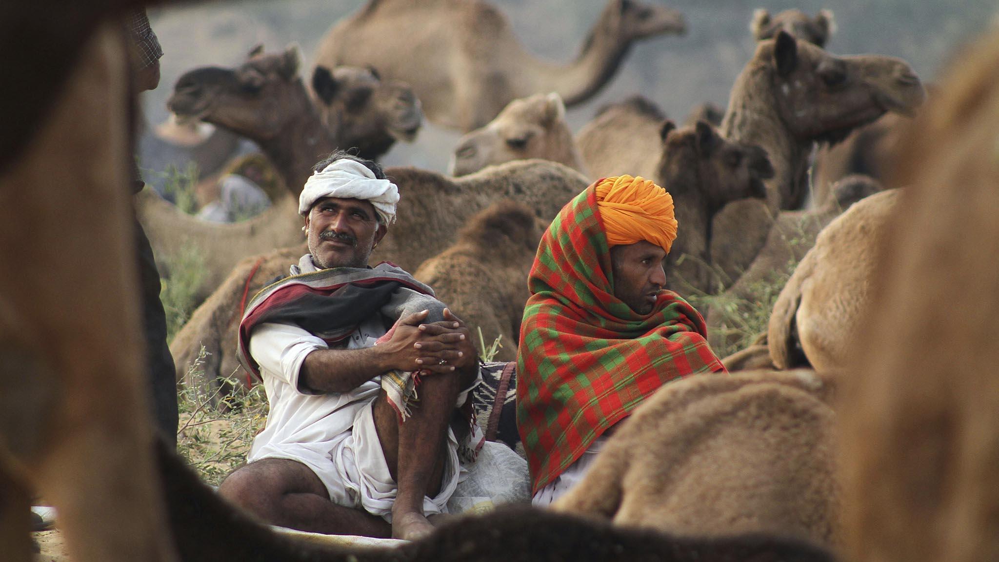 India Camel fair