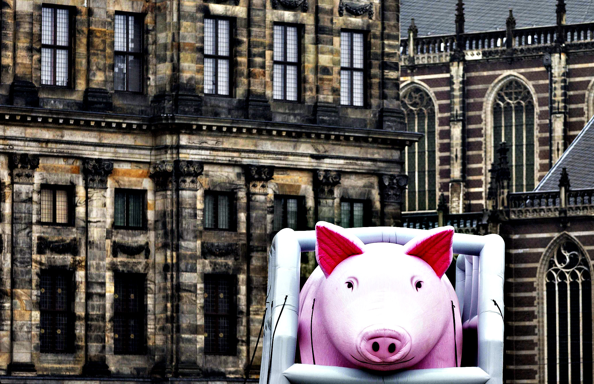 A huge inflatable pig is placed on the Dam square during a protest against illegal practicing in European pig farming, in Amsterdam, Netherlands, 12 November 2013. The actions is part of a international campaign of animal protection organization, Compassion in World Farming.