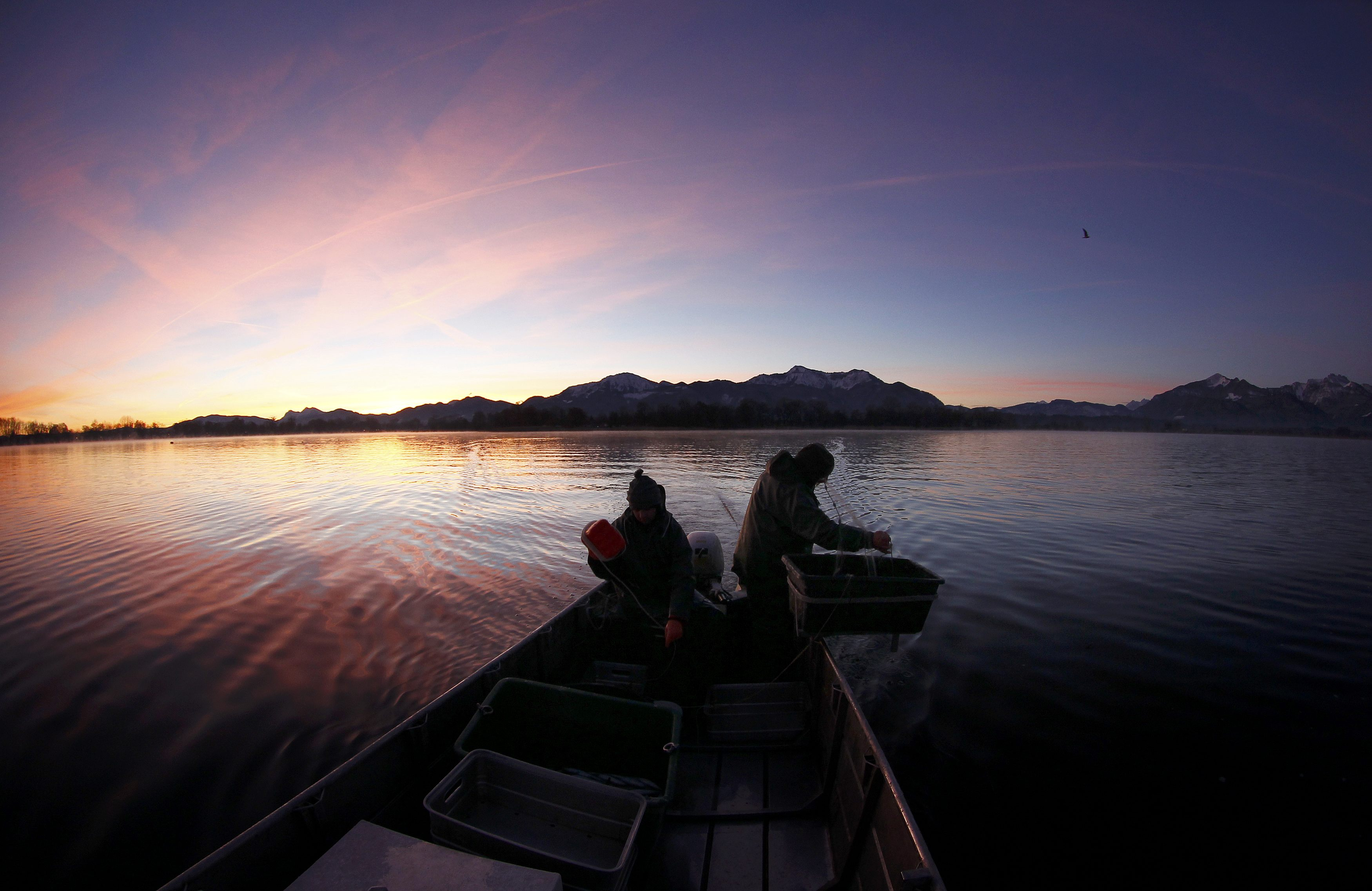 Fisherman Schaber, one of the oldest Chiemsee fishermen, and fisherman Boess haul in their nets with whitefish at lake Chiemsee near Prien