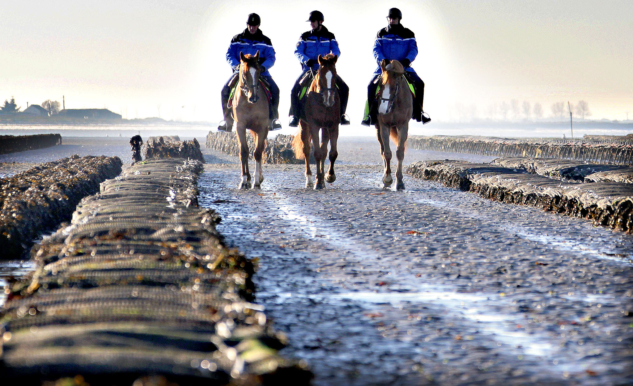 Horse mounted policemen patrol oyster cultures to protect them from thieves on December 10, 2013 in G fosse-Fontenay, northwestern France.