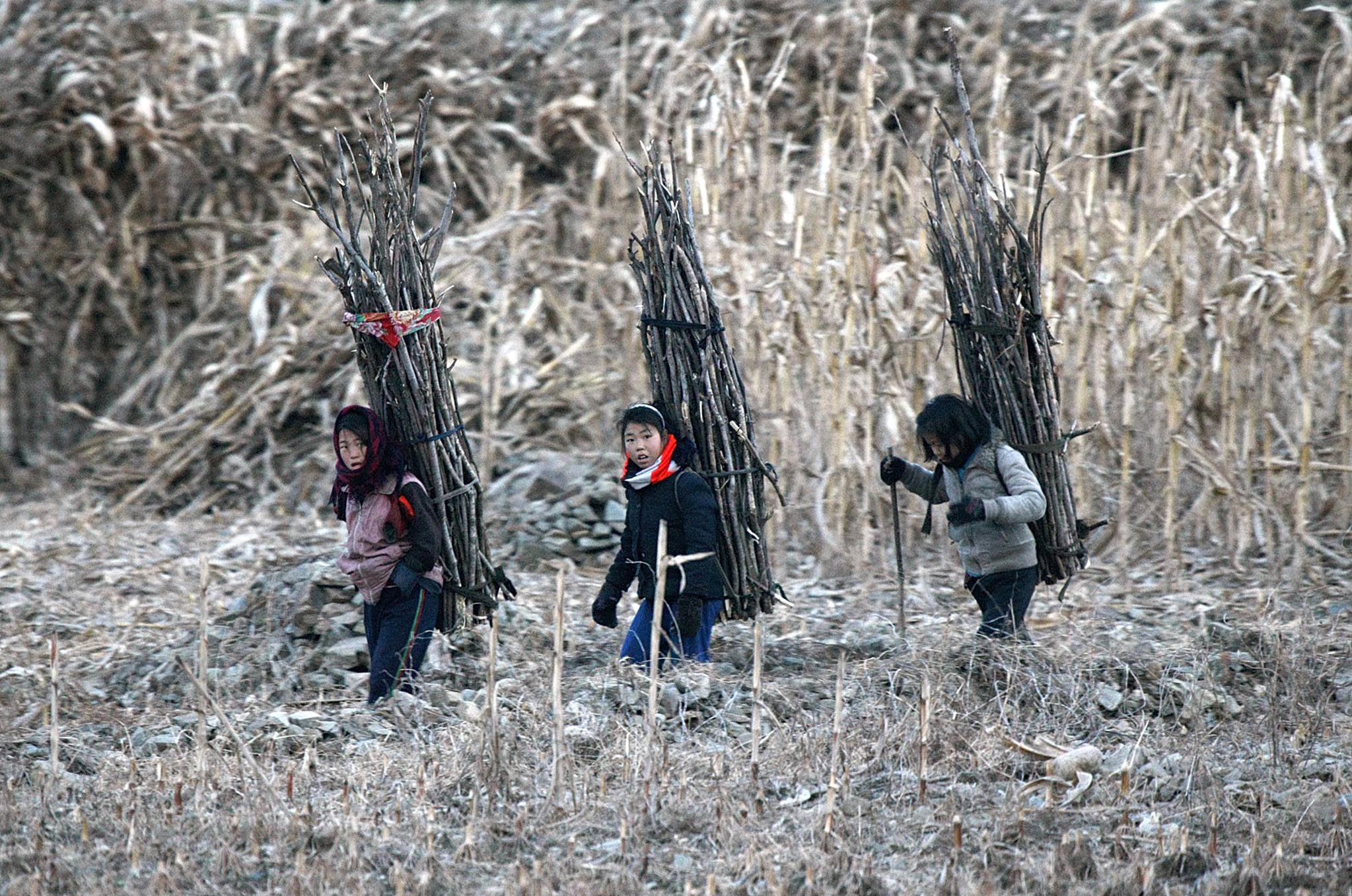 North Korean girls carry firewood as they walk on the banks of Yalu River, near the North Korean town of Sinuiju