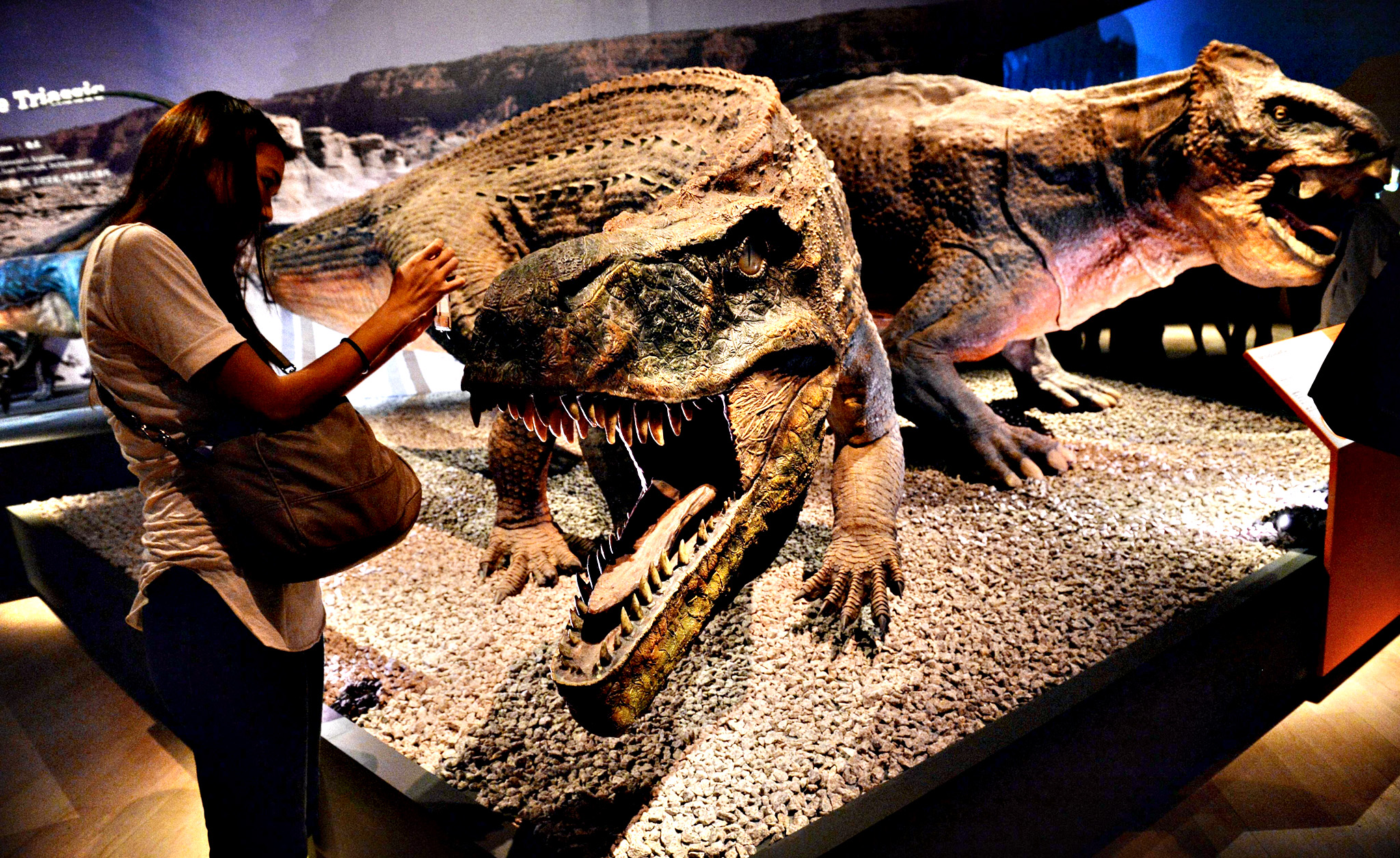 "A visitor take a photo of a life size replica of a lizard crocodile 'Sauroshuchus' exhibited at the Art Science Museum during a media preview in Singapore on January 23, 2014. The exhibit called ""Dinosaurs: from dawn to extinction "" traces evolution of dinosaurs 600 years back in time. The exhibition will open to visitors from January 25 to July 27."
