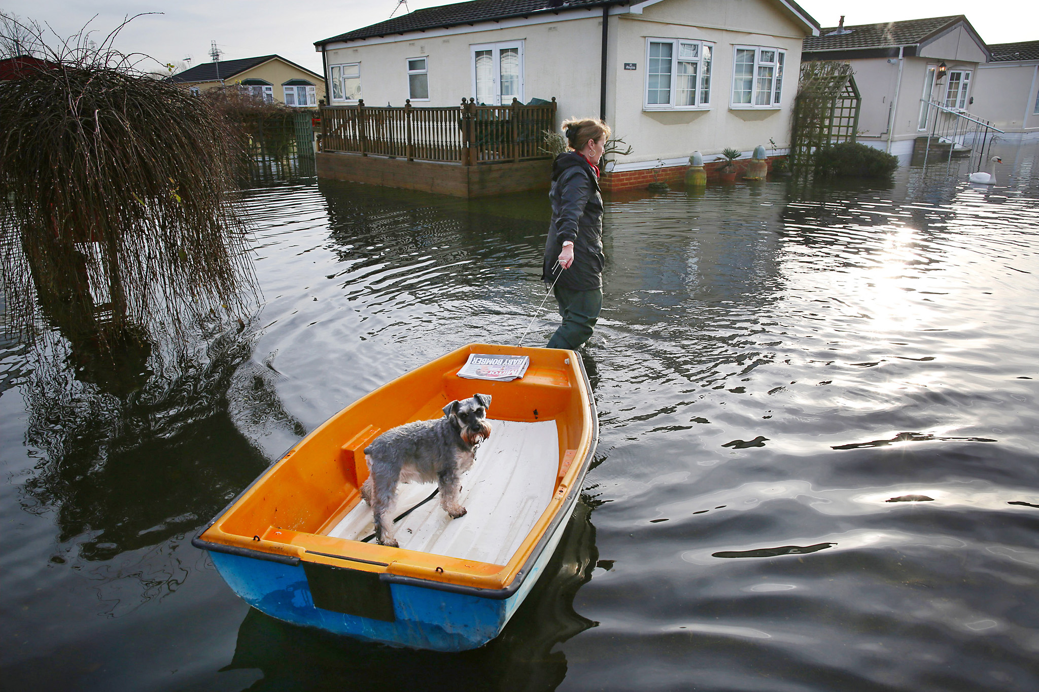 ***BESTPIX*** Severe Flood Warnings In Place For The UK...CHERTSEY, UNITED KINGDOM - JANUARY 08:  Christine Baker wades through flood water, pulling her dog Archie in a boat, at the Abbey Fields caravan park after the River Thames flooded on January 8, 2014 in Chersey, England. Parts of the United Kingdon are entering a third week of flooding and stormy conditions.