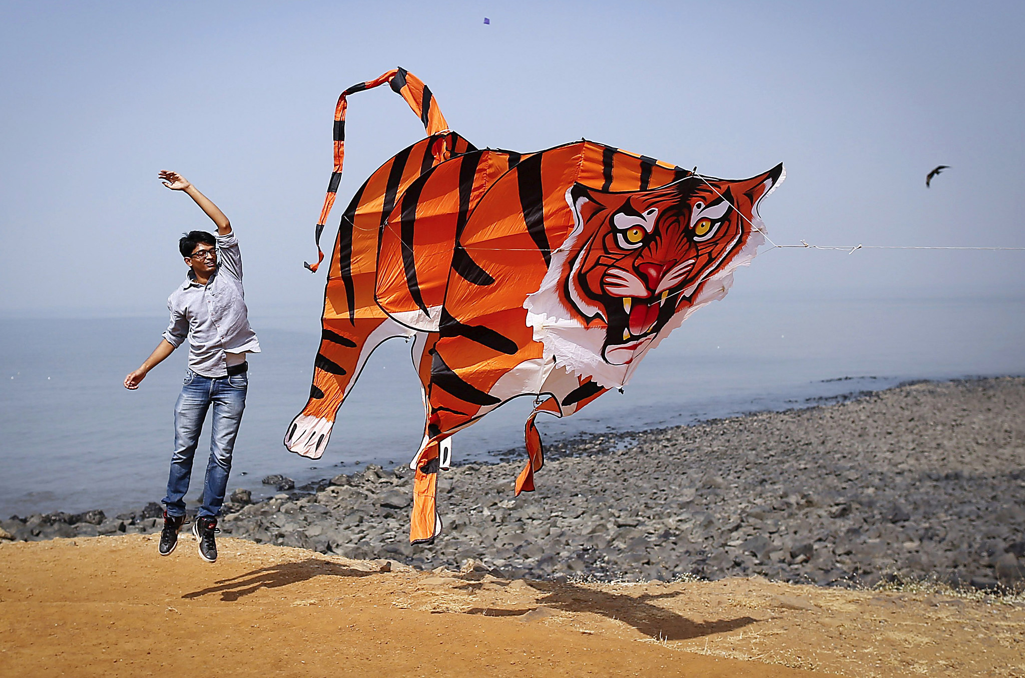 A participant flies a tiger shaped kite during the International Kite Festival in Mumbai...A participant flies a tiger shaped kite during the International Kite Festival in Mumbai January 8, 2014. REUTERS/Danish Siddiqui