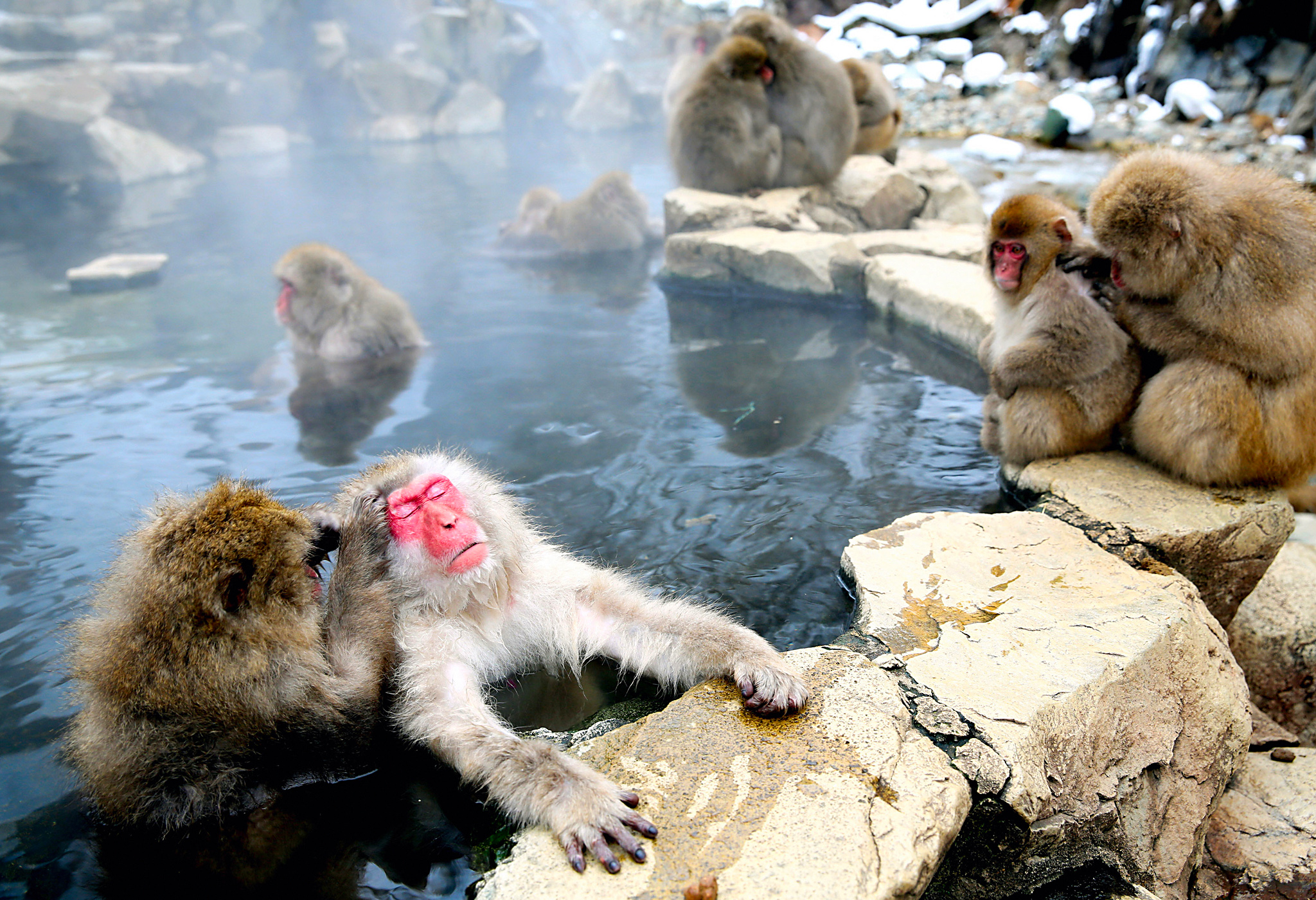 ***BESTPIX*** Japanese Macaque Monkeys Relax In Hot Springs...YAMANOUCHI, JAPAN - JANUARY 08:  (CHINA OUT, SOUTH KOREA OUT) Japanese Macaque monkeys groom each other and relax in a hot spring at the Jigokudani, or Hell's Valley Monkey Park on January 8, 2014 in Yamanouchi, Nagano, Japan.
