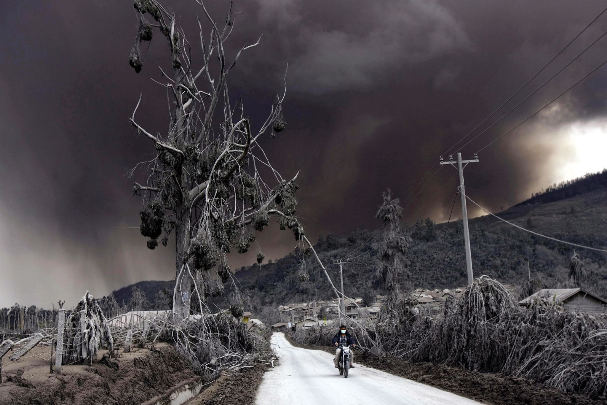 Mount Sinabung spews hot lava and ashes...epa04024301 An Indonesian villager rides his motorcycle past a damaged tree as Mount Sinabung spews volcanic smoke, at Sigarang Garang village in Karo, North Sumatra, Indonesia, 16 January 2014. Thousands of people have been sheltering for months in mosques, churches and government buildings just out of reach of the past months' eruptions of Indonesia's Mount Sinabung. The 2,460-metre volcano had been dormant for 400 years before it erupted in August 2010, forcing more than 30,000 to flee their homes.  EPA/DEDI SAHPUTRA
