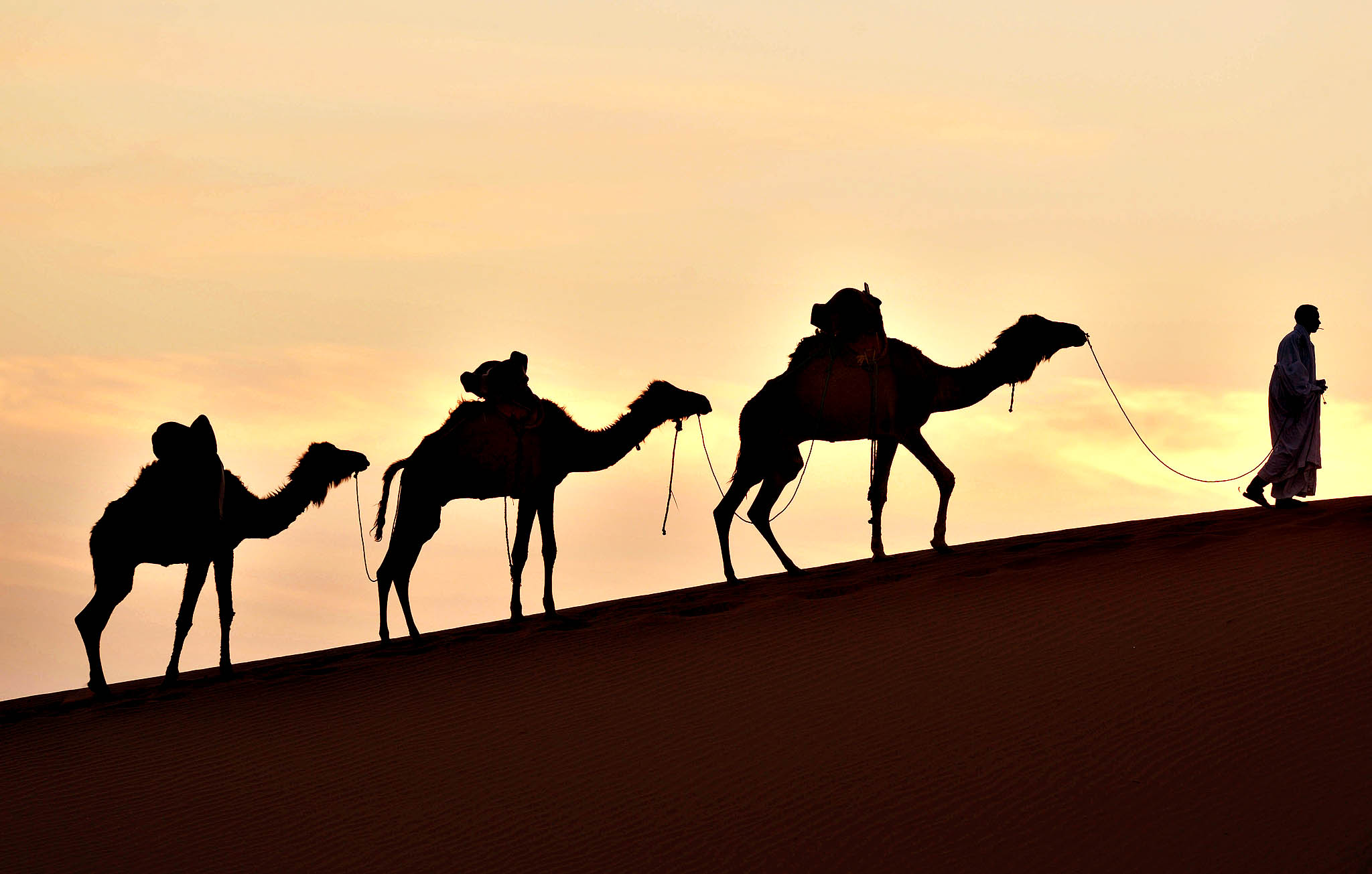 A man walks on a sand dune with his camels in Mhamid el-Ghizlane, in the Moroccan southern Sahara desert.