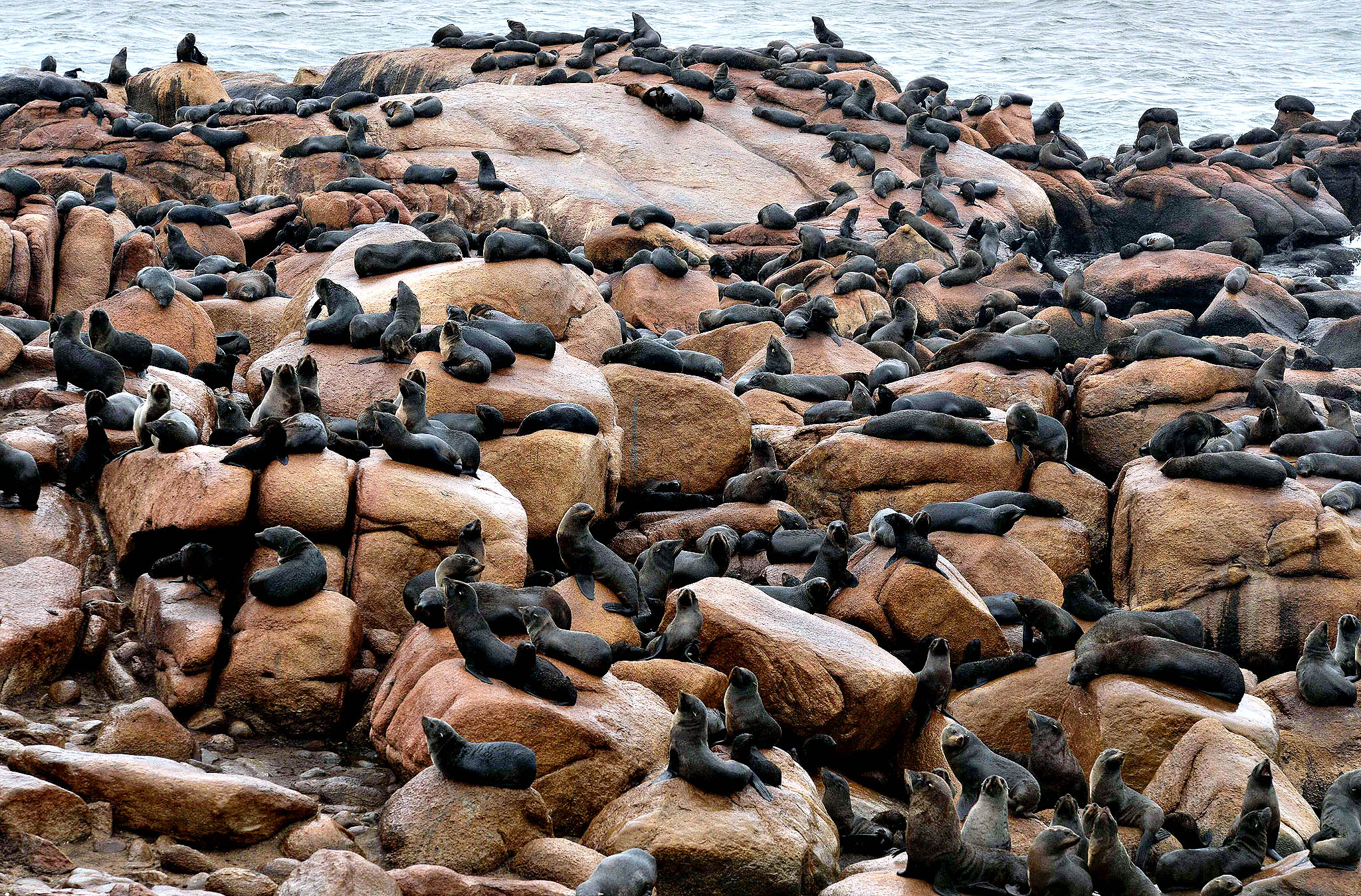 Fur seals rest at Isla de Lobos, a small island located about 8 km off the coast of Punta del Este, 140 km east of Montevideo, on March 19, 2014. A slaughterhouse operated in the island until 1991, and since then is the main reserve in South America to fur seals (Arctocephalus australis) and sea lions (Otaria flavescens).