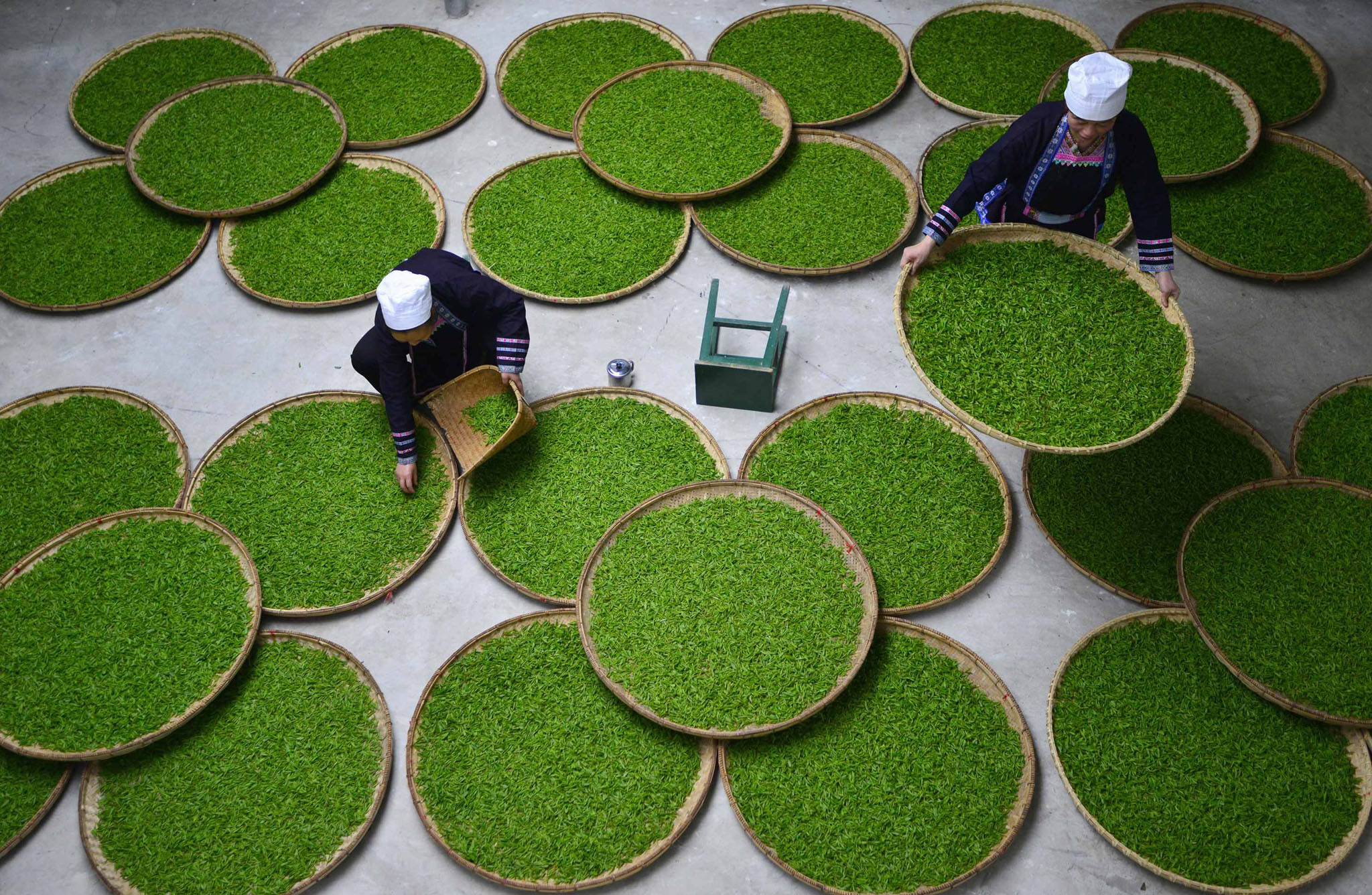 Ethnic Dong women work at a tea leaf processing factory in Liping county, Guizhou province, March 28, 2014. According to local media, Liping county's tea plantations attracted more than 60,000 women workers from nearby villages this spring and each tea picker earns around 100 yuan ($16.10) per diem.