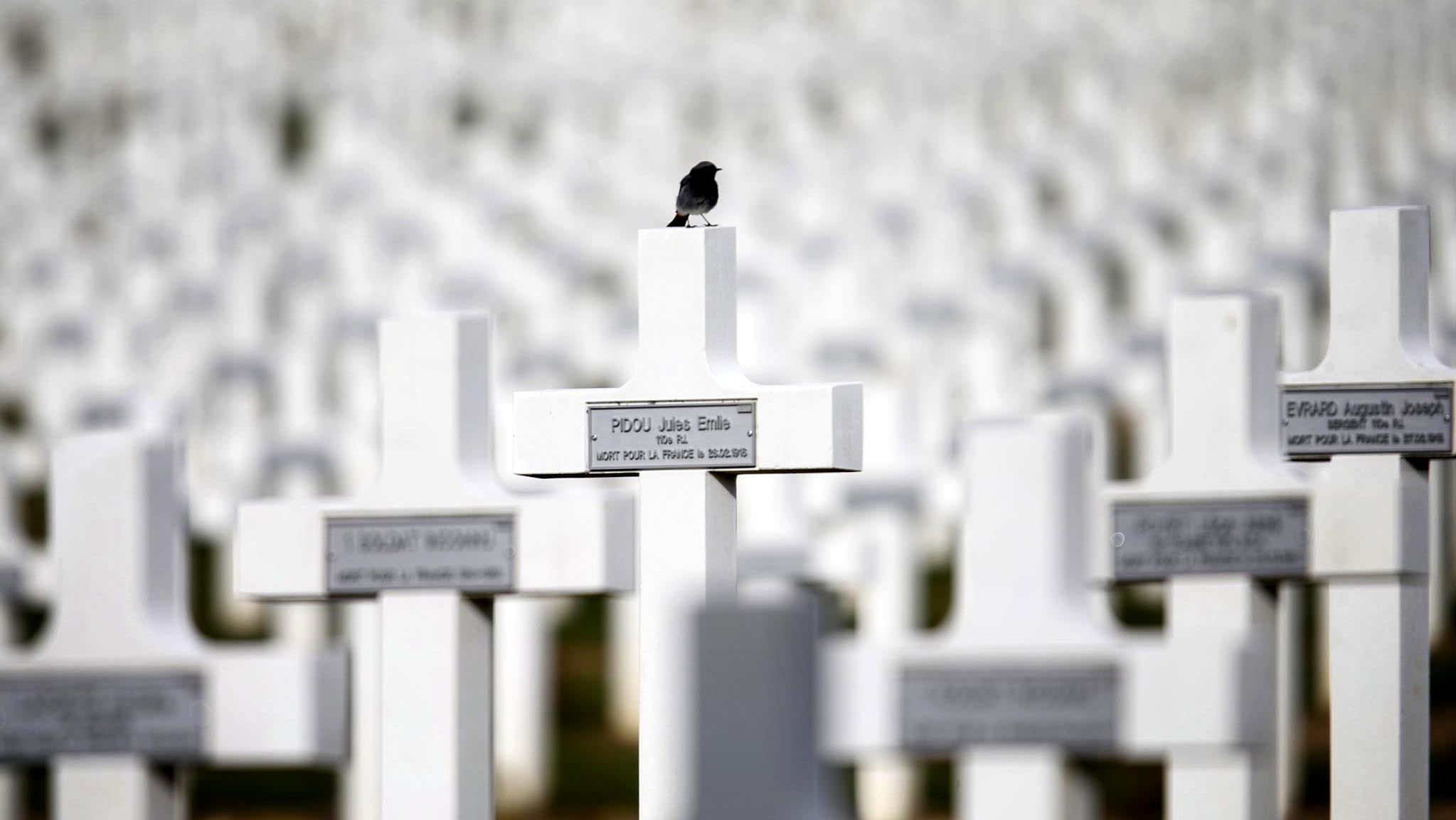 A bird perches on one of the 16,142 graves of the Douaumont cemetery near Verdun, northeastern France