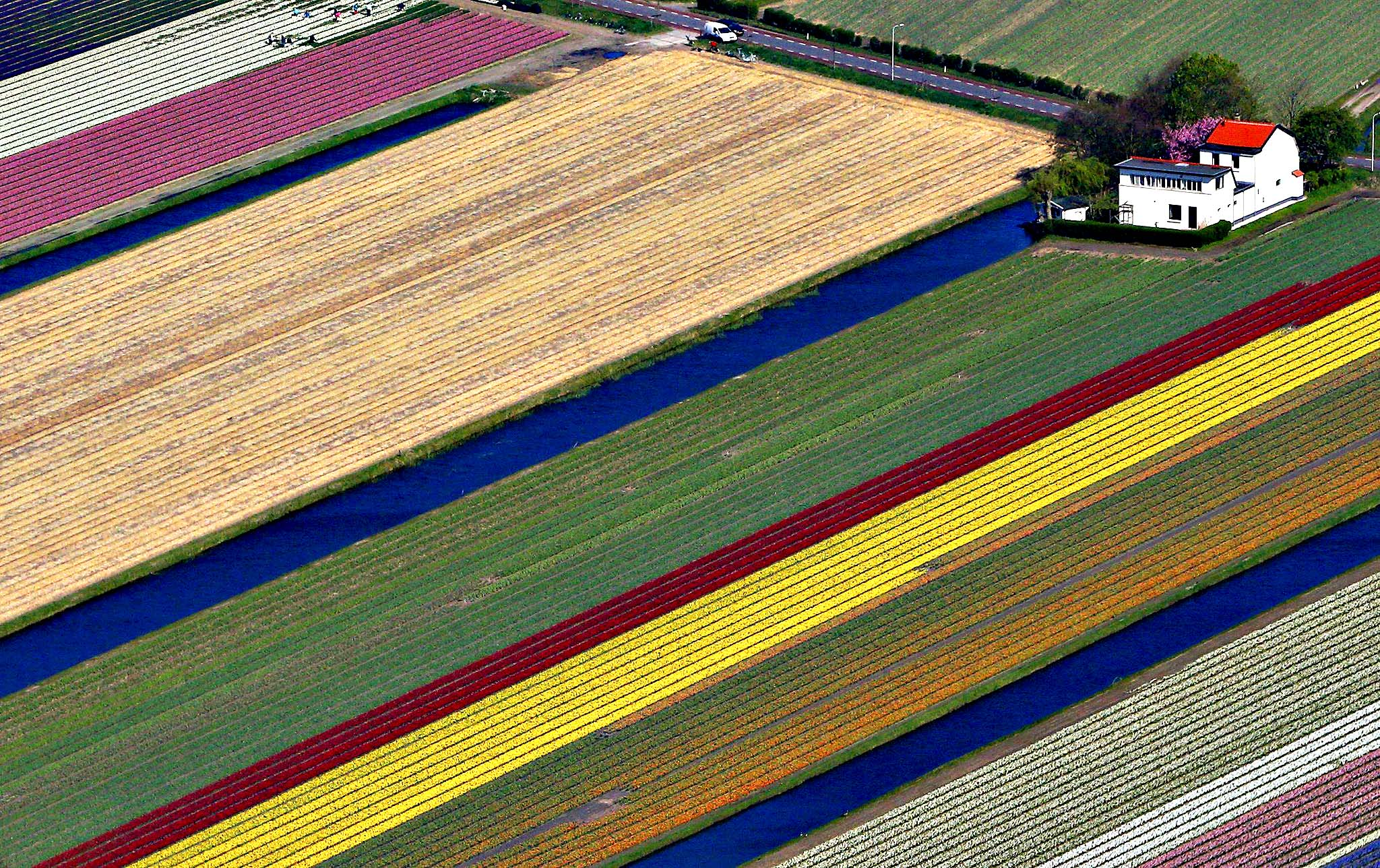 Aerial view of flowers fields near the Keukenhof park, also known as the Garden of Europe, in Lisse April 9, 2014. Keukenhof, employing some 30 gardeners, is considered to be the world's largest flower garden displaying millions of flowers every year.