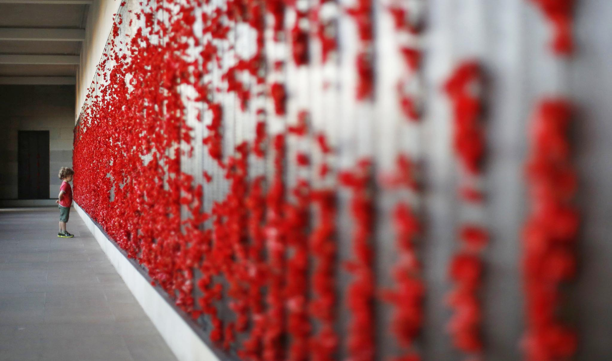 A boy looks at the World War One Wall of Remembrance lined with hundreds of red poppies on the eve of ANZAC Day at the Australian National War Memorial in Canberra