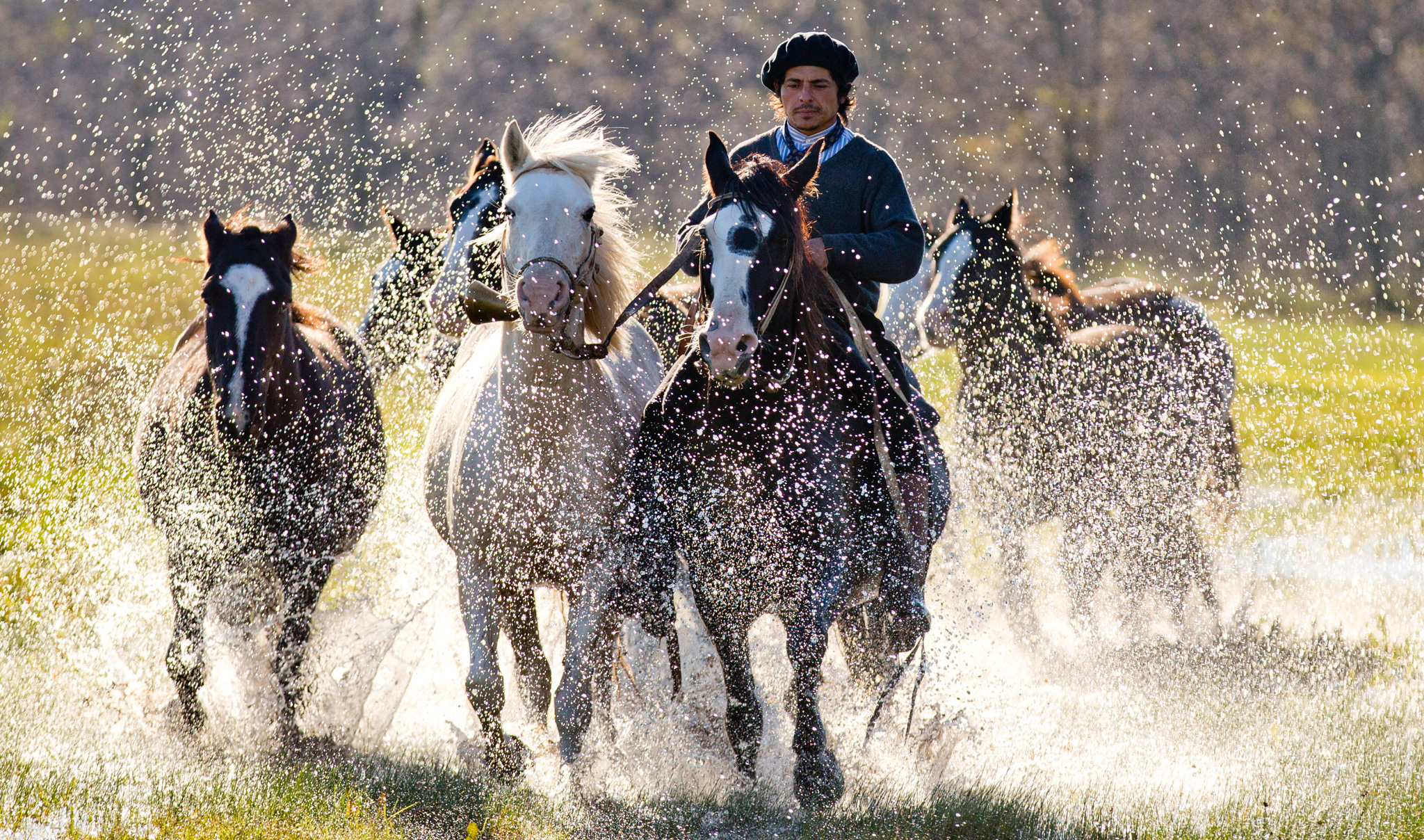 "In this May 29, 2014, photo, Martin Tata rides his horse Milonga as he guides other horses to a corral in San Antonio de Areco, Argentina. In San Antonio de Areco, a bastion of Argentine gaucho culture outside the capital of Buenos Aires, the 33-year-old Tatta is known as ""the horse whisperer."" (AP Photo/Natacha Pisarenko)"