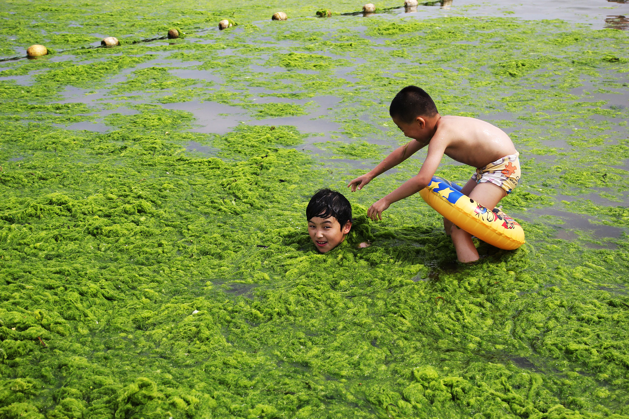 children playing with algae on a beach in Qingdao, east China's Shandong province