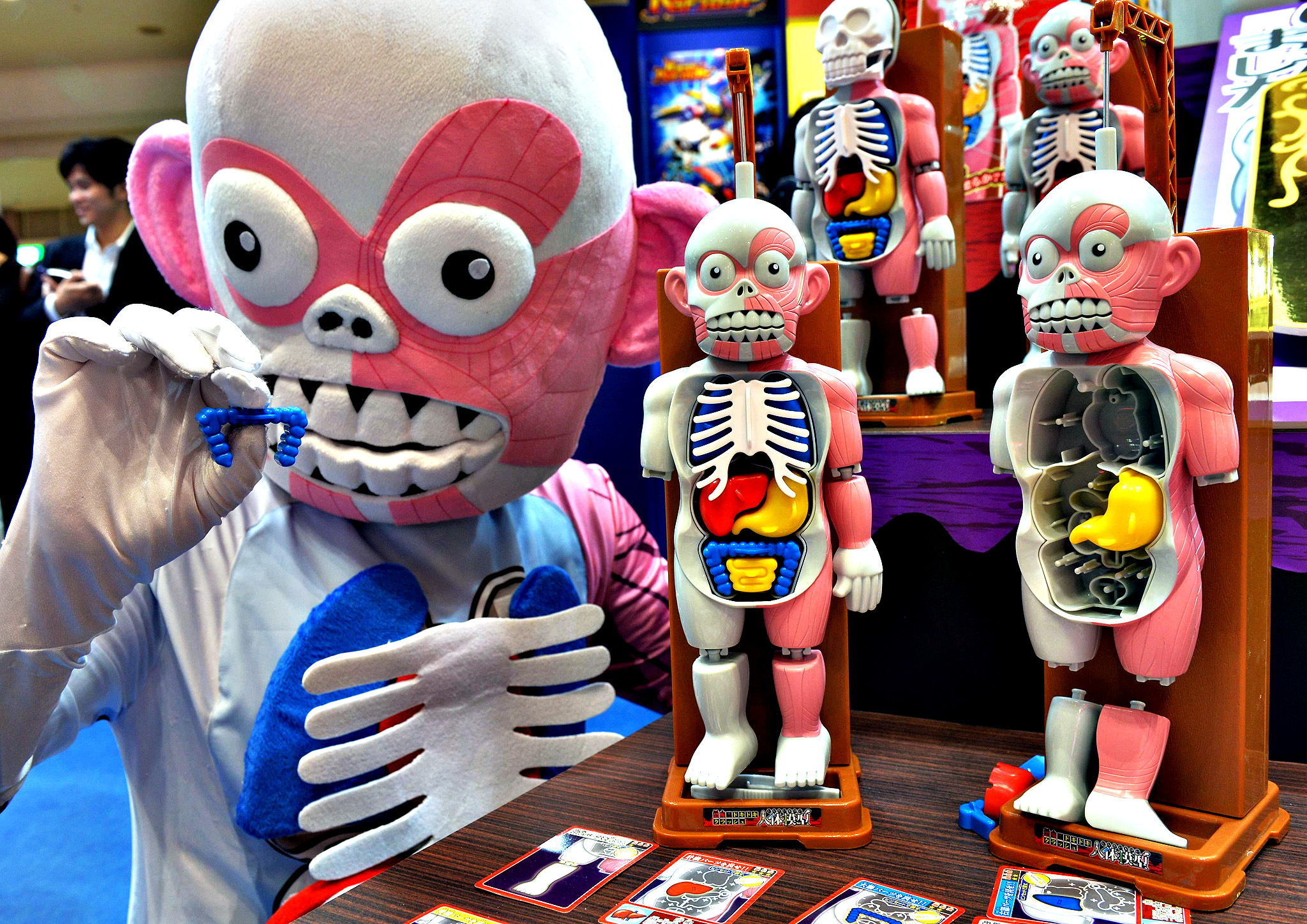 """An employee of Japan's toy maker Megahouse displays the new puzzle of human parts and organs """"Jintai-mokei"""" (model of the human anatomy) at the annual Tokyo Toy Show in Tokyo"""