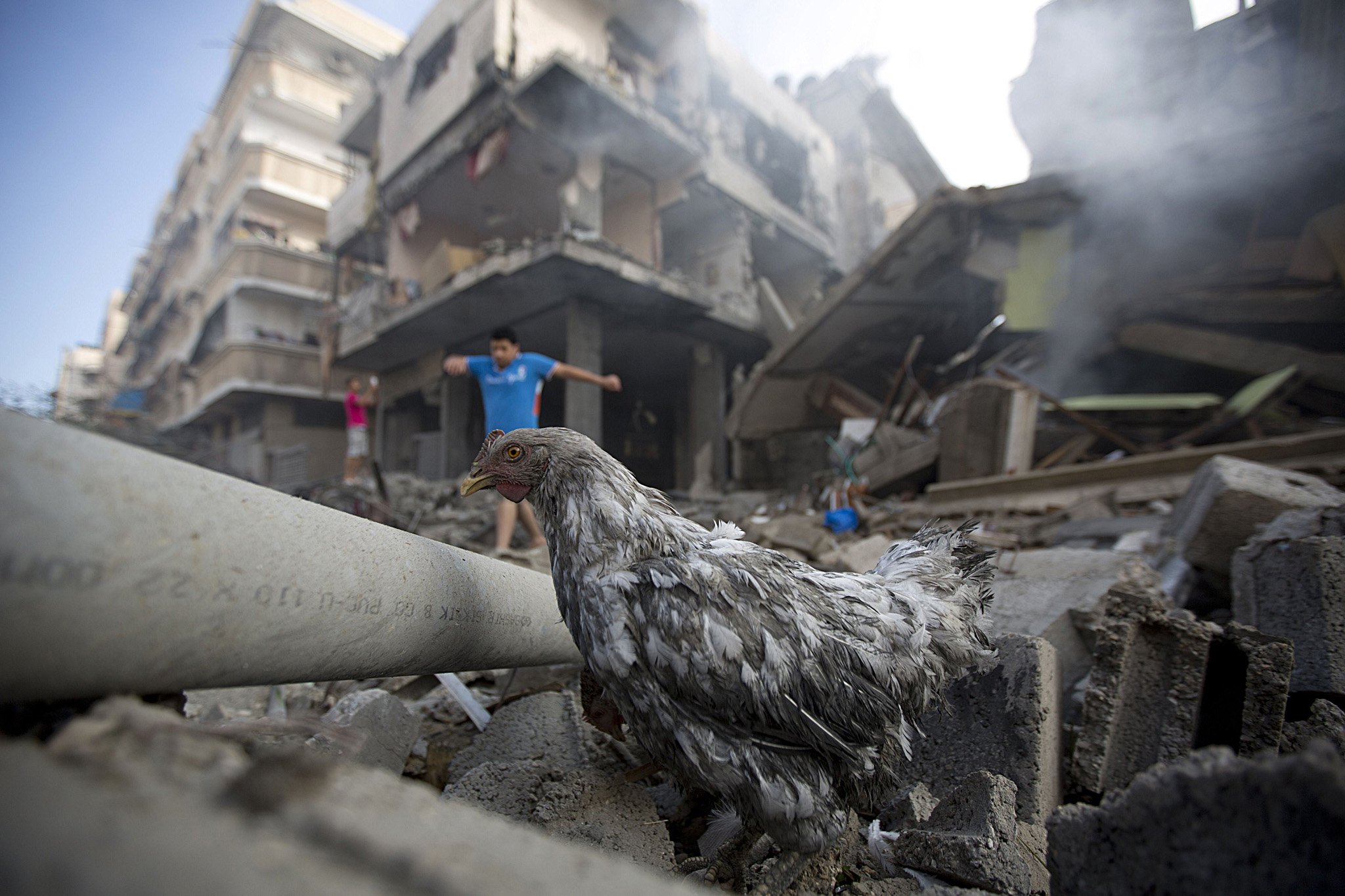 A chicken walks amidst the rubble of a d...A chicken walks amidst the rubble of a destroyed building following an Israeli air strike in Gaza City on July 11, 2014. Israeli warplanes kept up deadly raids on Gaza but failed to stop Palestinian militants firing rockets across the border, as the United States offered to help negotiate a truce. AFP PHOTO/MOHAMMED ABED MOHAMMED ABED/AFP/Getty Images