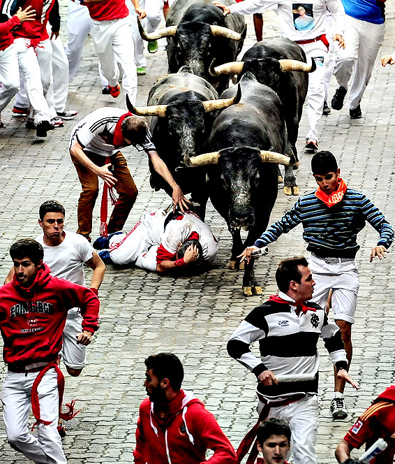 A runner falls in front of ''Miura'' fighting bulls during the running of the bulls, at the San Fermin festival, in Pamplona, Spain, Monday, July 14, 2014. Revelers from around the world arrive to Pamplona every year to take part in some of the eight days of the running of the bulls.