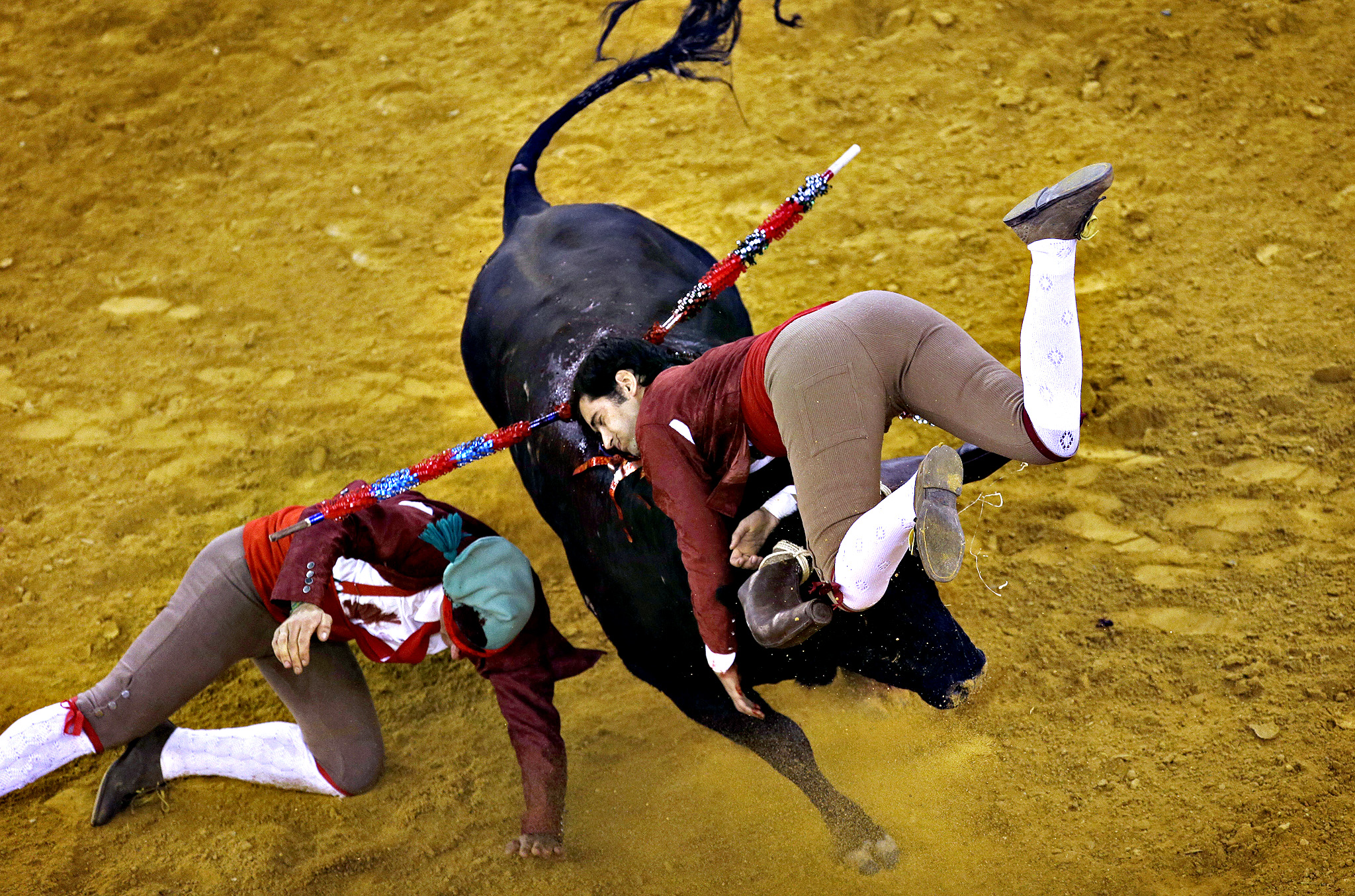 "Portuguese forcados of a group of Lisbon are tossed by a bull as they try to catch it during a traditional Portuguese bullfight at Lisbon's Campo Pequeno bullring, Thursday, July 3, 2014. The forcados are a group of eight men who perform the ""pega de cara,"" or ""face catch,"" in which they challenge a fighting bull bare-handed. The final purpose is to subdue the bull."