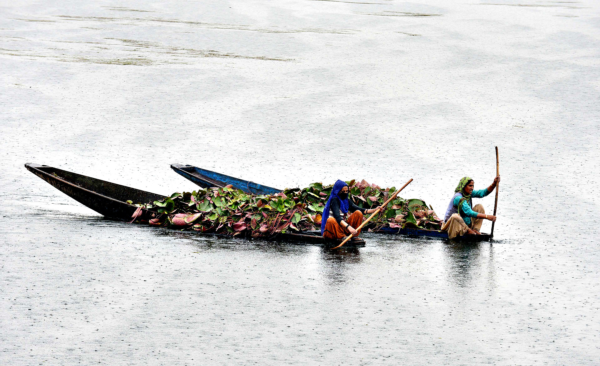 Kashmiri women paddle boats loaded with lotus roots for cattle feed on Dal Lake in Srinagar on August 27, 2014.   Kashmir is divided between India and Pakistan, which both claim the region in full but administer separate partial areas. The neighbours have fought two of their three wars since independence over its control.