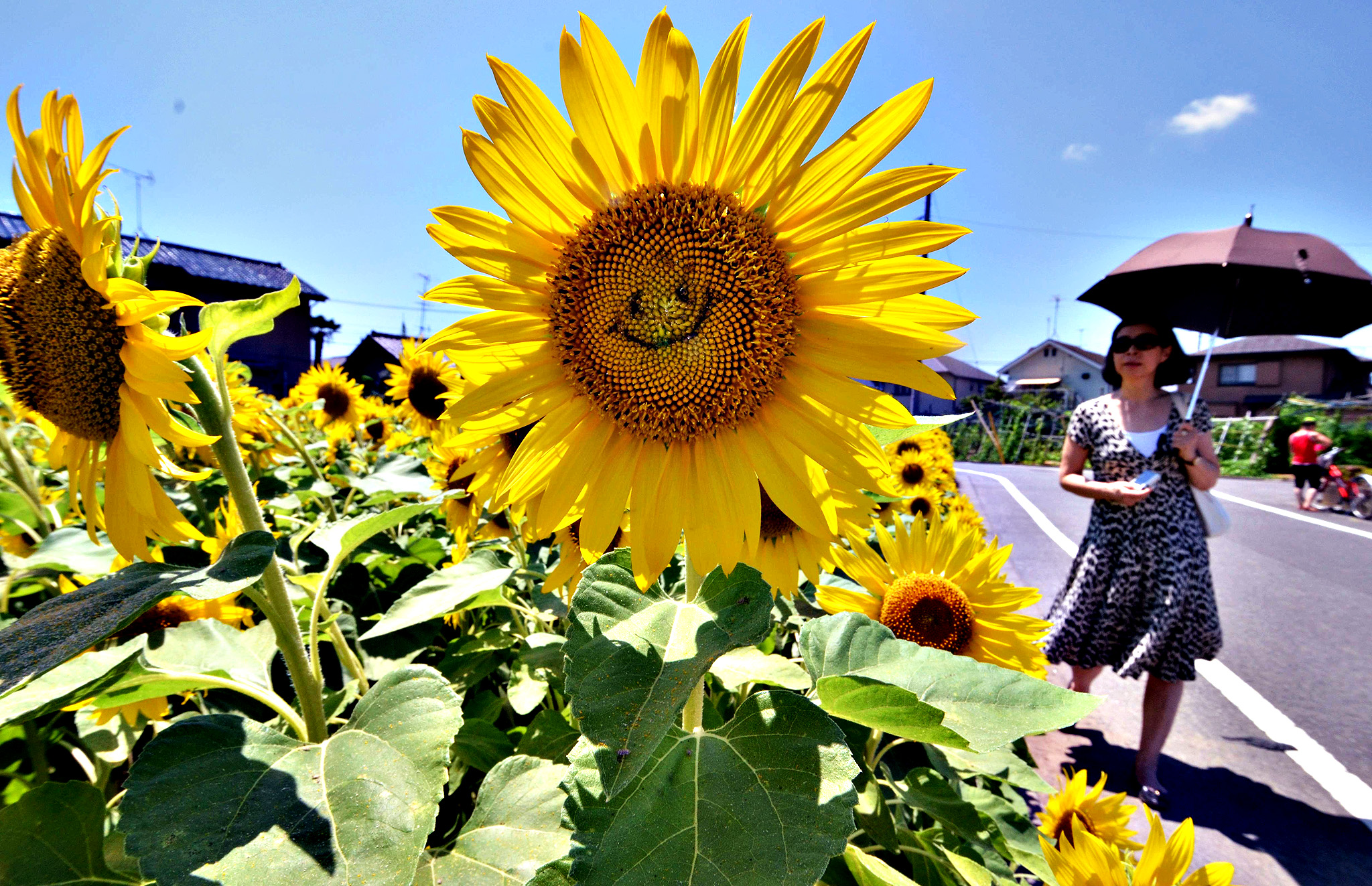 "A woman walks past a ""smiling"" sunflower in a field in Tokyo on August 7, 2014. Some 20,000 sunflowers were enjoyed by visitors to the area this week."
