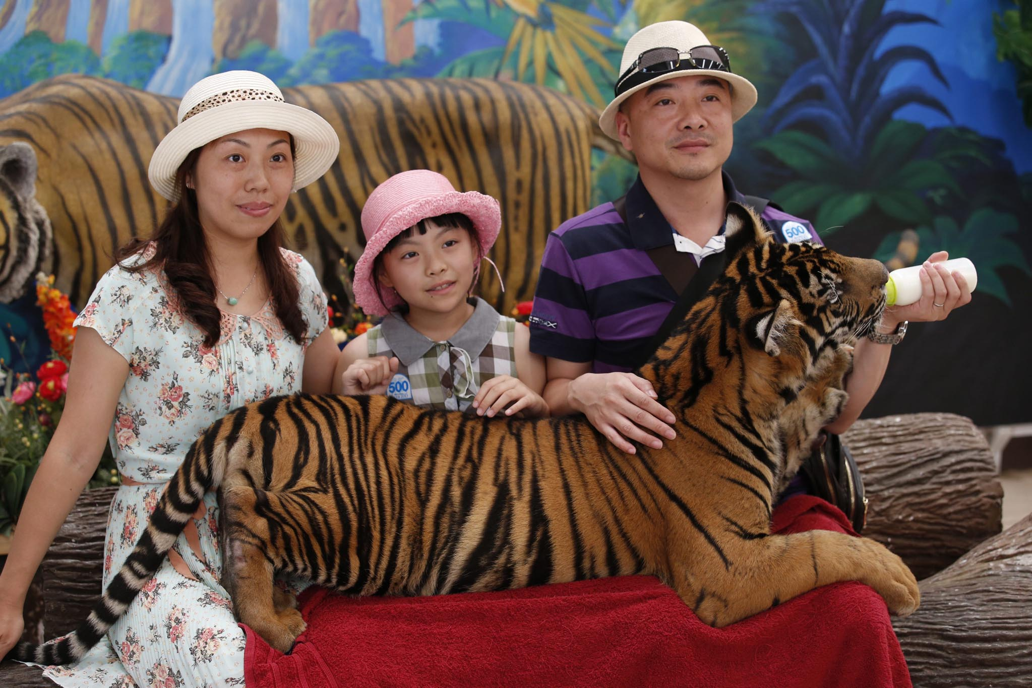 Thailand's booming animal attractions