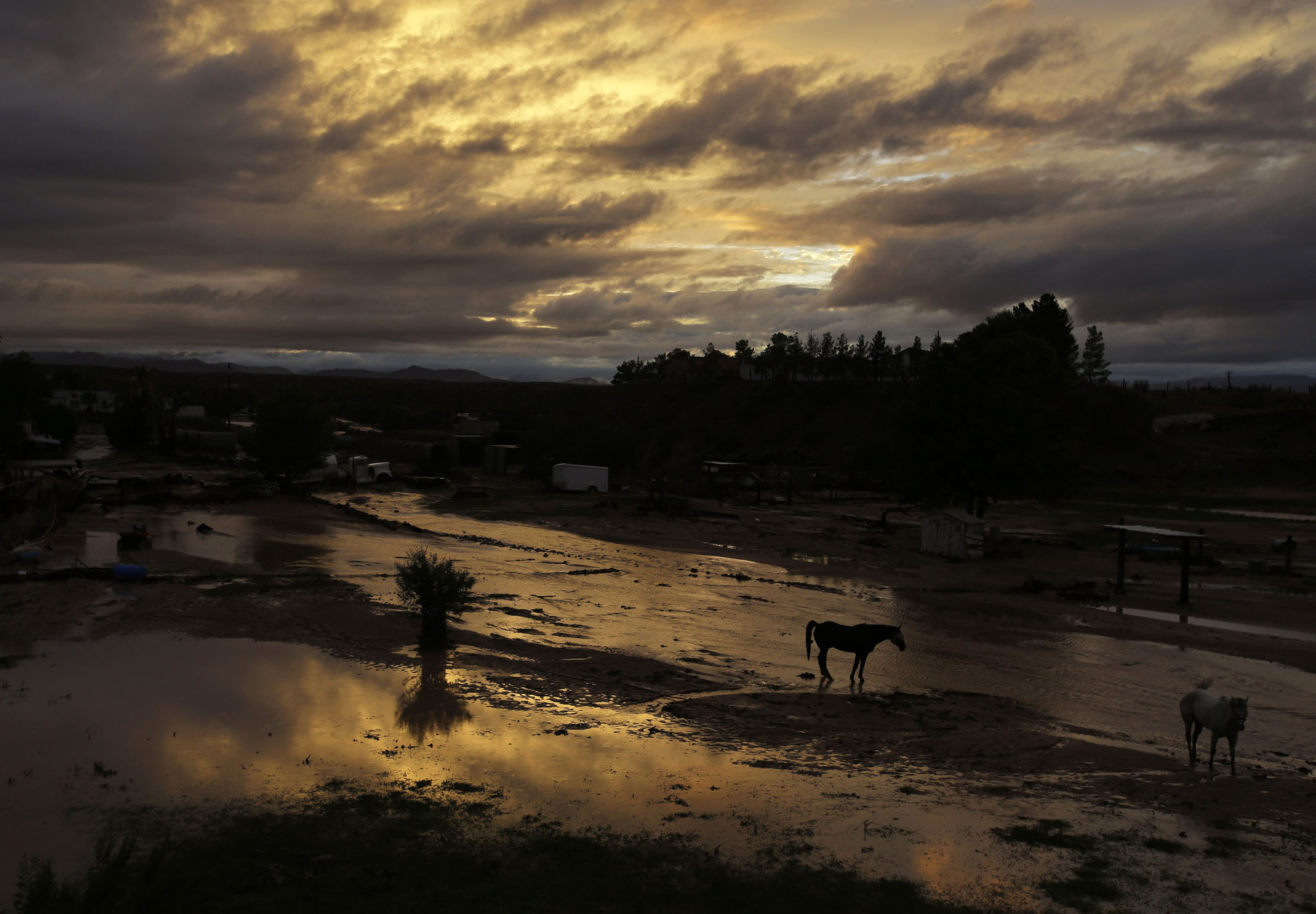 Horses walk through flood water behind a home in Moapa, Nev., Monday, Sept. 8, 2014. Flooding throughout the area damaged homes and roads. (AP Photo/John Locher)