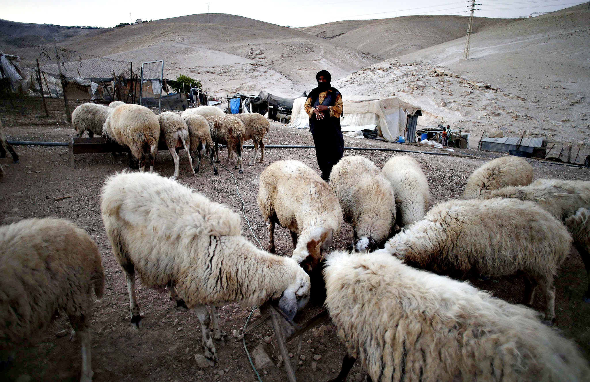 A Palestinian Bedouin woman stands next to her sheep in the West Bank village of Al-Eizariya, near east of Jerusalem.