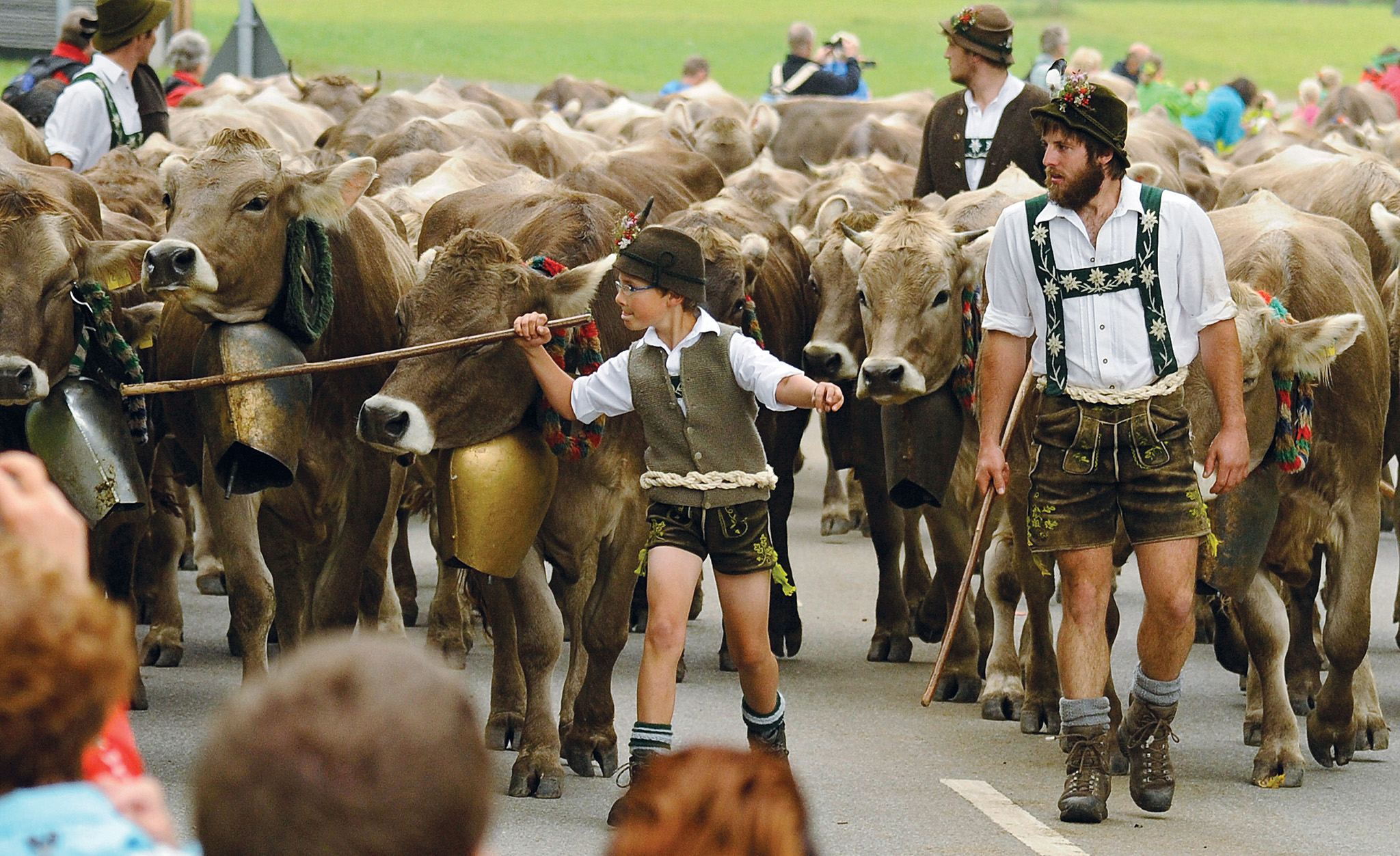 Cattle Return From Alpine Summer Grazing...BAD HINDELANG, GERMANY - SEPTEMBER 11: Herders dressed in traditional lederhosen lead cattle returning from summer alpine grazing during the annual cattle drive in the Allgaeu region on September 11, 2014 in Bad Hindelang, Germany. Every year cattle herders bring the animals to Bavarian mountain meadows in the spring and remain their through the summer before bringing them back to farms in the villages below for the winter. The herders spend the summer living in a mountain hut called an Alm, often without electricity in a tradition going back centuries. This year brought an unusually high number of cattle fatalities during the summer, which farmers attribute to poisoning from natural causes. In the last few months there have also been several cases of fatal attacks by cattle against hikers, also an unusual occurrence. (Photo by Philipp Guelland/Getty Images)