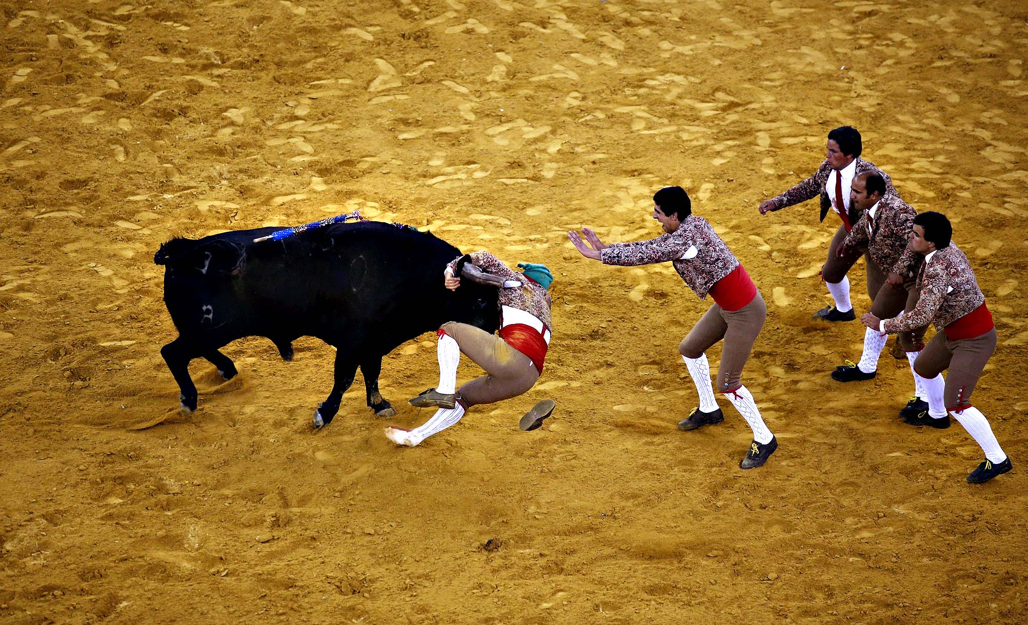 Members of Vila Franca Xira forcados group perform during a bullfight at Campo Pequeno bullring in Lisbon September 4, 2014. Forcados are traditional Portuguese bullfighters who catch bulls with their bare hands during the festival.