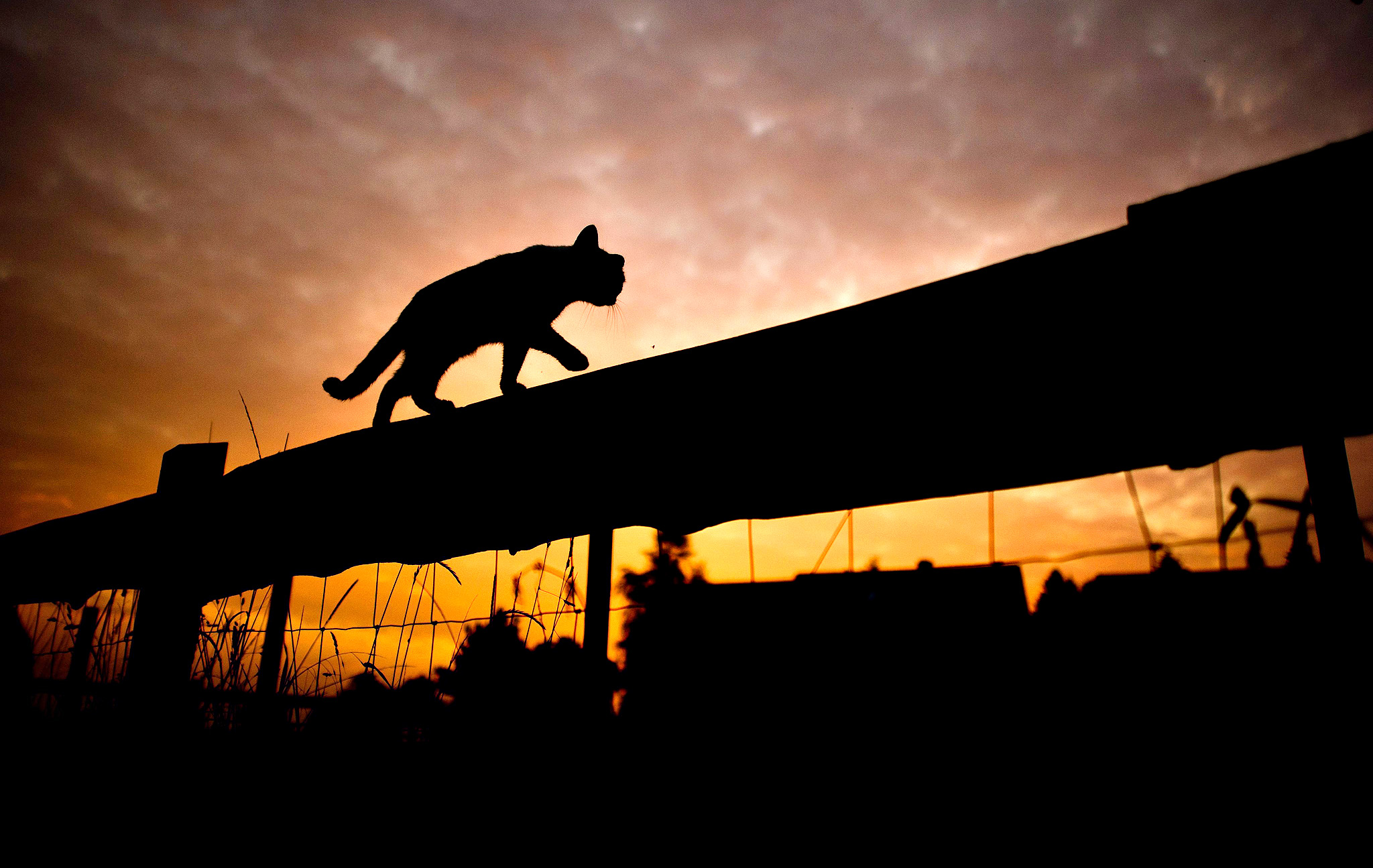 The silhouette of a cat walking on top of a fence stands out against the sky during sunrise near Sehnde, Germany on Tuesday. Indian summer, or Altweibersommer (old womens summer) in German, is a weather phenomenon which often brings sunny weather between mid-September and the start of October in parts of central Europe.