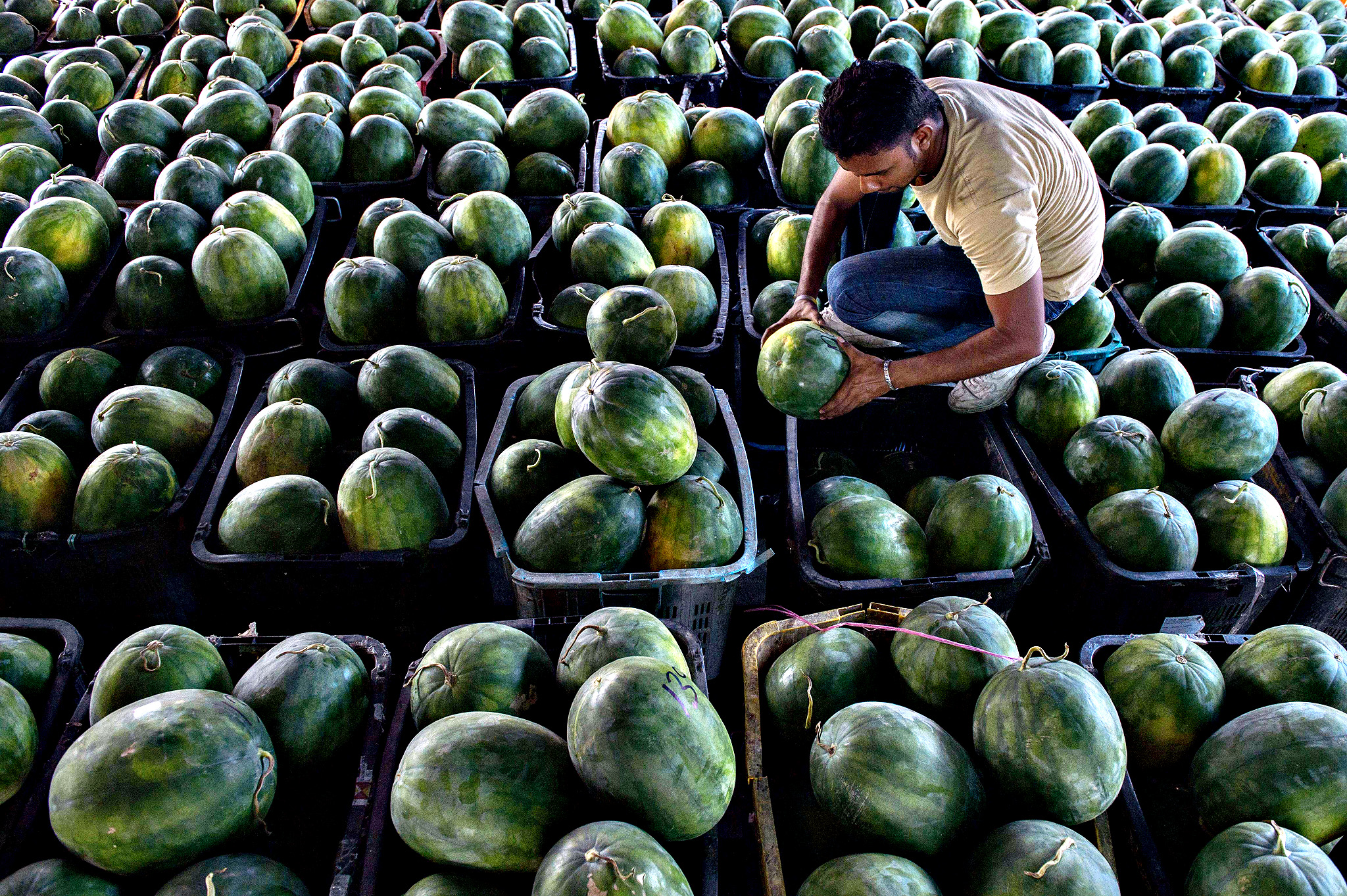A worker inspects stocks of watermelons at a wholesale market in Selayang, near Kuala Lumpur on September 3, 2014. Malaysia's economy grew a better-than-expected 6.4 percent in the year's second quarter on the back of higher exports and strong private domestic demand, the central bank said August 15.
