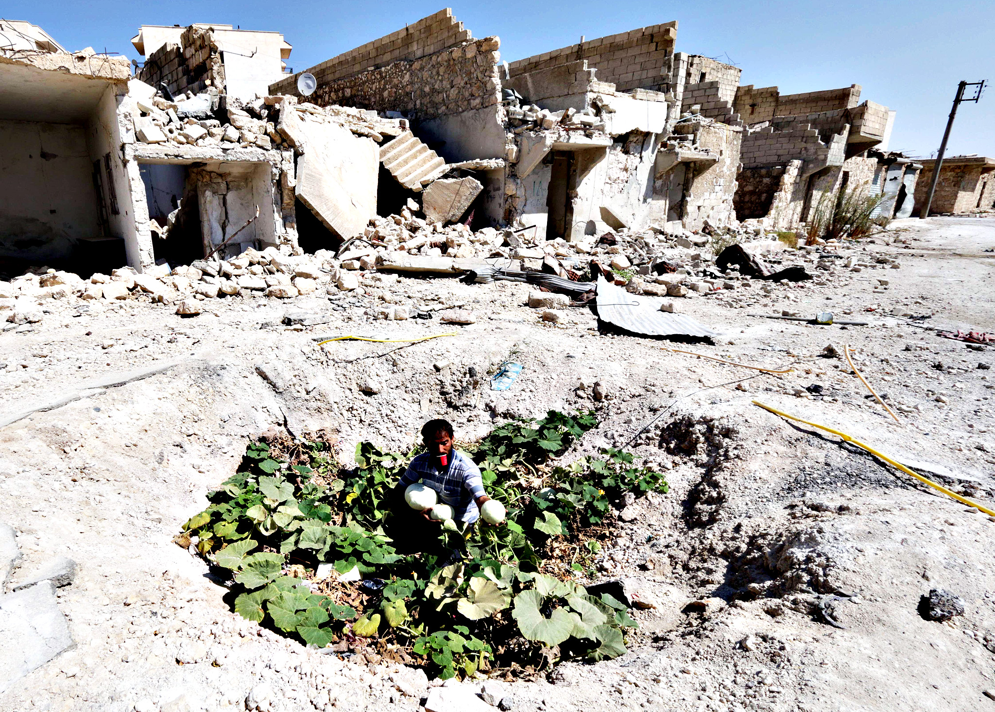 A Syrian man collects vegetables from a vegetable patch locals grew at the site where a barrel bomb hit a sewage pipe in the Baedeen neighbourhood of the northern Syrian city of Aleppo on September 3, 2014. Aleppo province has been subject to a particularly fierce regime aerial campaign, including the use of explosive-packed barrel bombs tossed from regime helicopters that rights groups say kill indiscriminately.