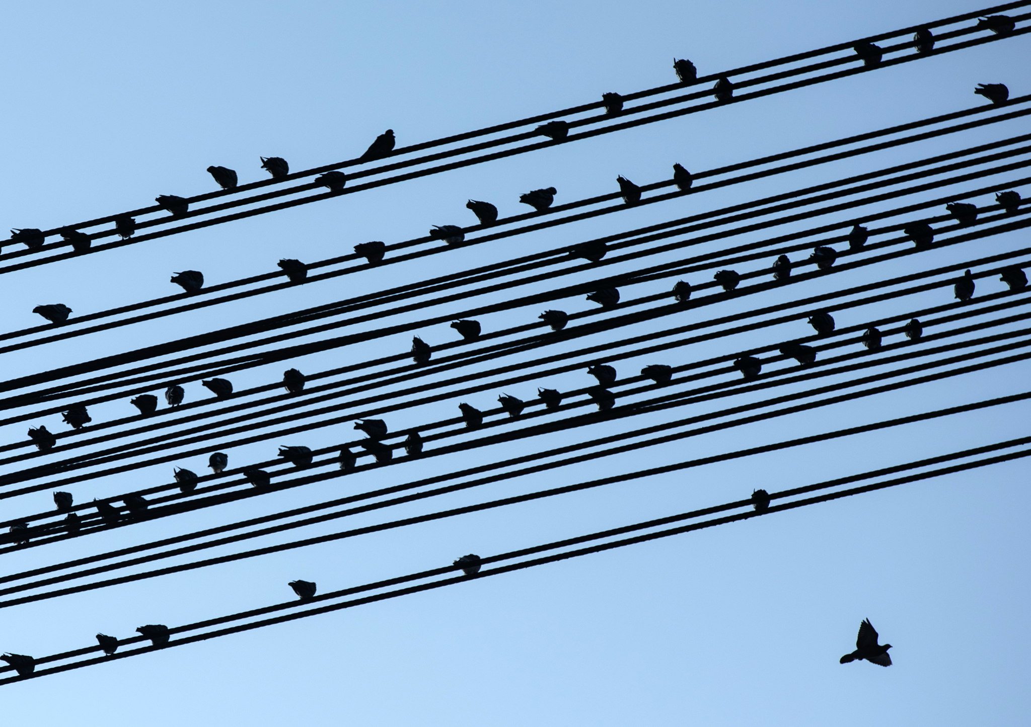 Doves  sit  on  cables at   a former lignite surface mining area in  Grosspoesna near Leipzig, central Germany.