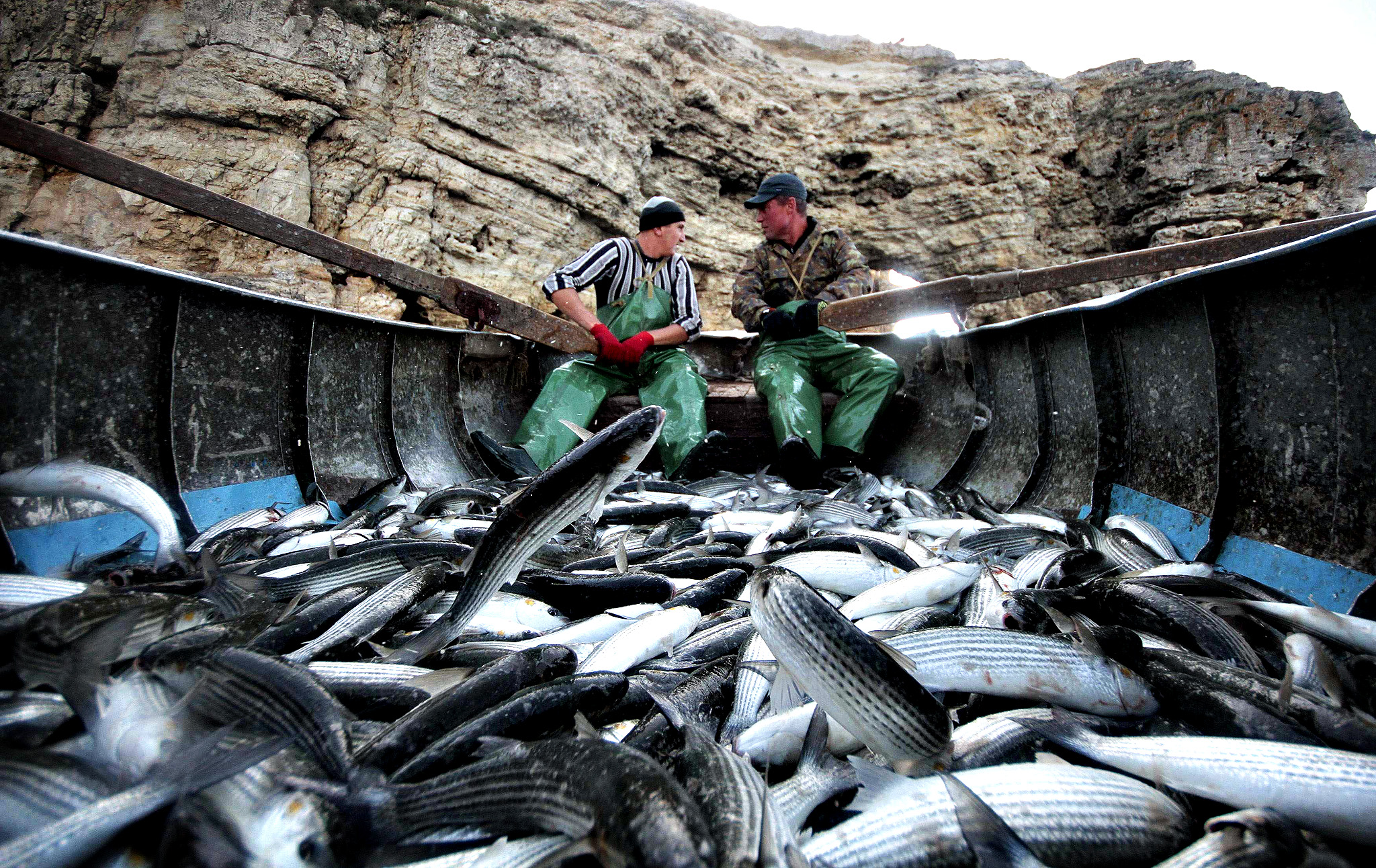 Fishermen row a boat loaded with mullet near the fishing farm in the Crimean village of Olenivka. Russian wheat has made a surprise early exit from key global export markets, despite the country's near-record crop, after domestic prices rose in the fall-out from the Ukraine crisis. Moscow in early August imposed a one-year ban on all meat, fish, dairy, fruit and vegetables from the United States, the 28 European Union countries, Canada, Australia and Norway.