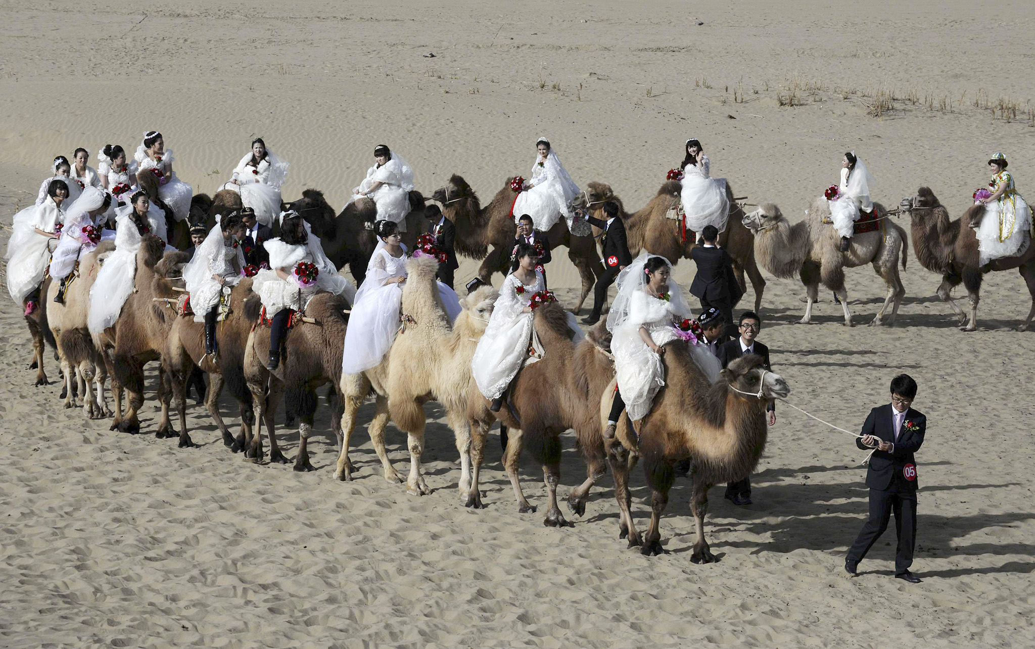Newly-wed grooms lead camels carrying their brides during a mass wedding in a desert at a tourism area containing a populus euphratica reserve in Yuli county...Newly-wed grooms lead camels carrying their brides during a mass wedding in a desert at a tourism area containing a populus euphratica reserve in Yuli county, Xinjiang Uighur Autonomous Region, November 2, 2014. A total of 22 couples took part in the mass wedding on Sunday, local media reported. Picture taken November 2, 2014. REUTERS/China Daily (CHINA - Tags: SOCIETY ANIMALS TPX IMAGES OF THE DAY) CHINA OUT. NO COMMERCIAL OR EDITORIAL SALES IN CHINA