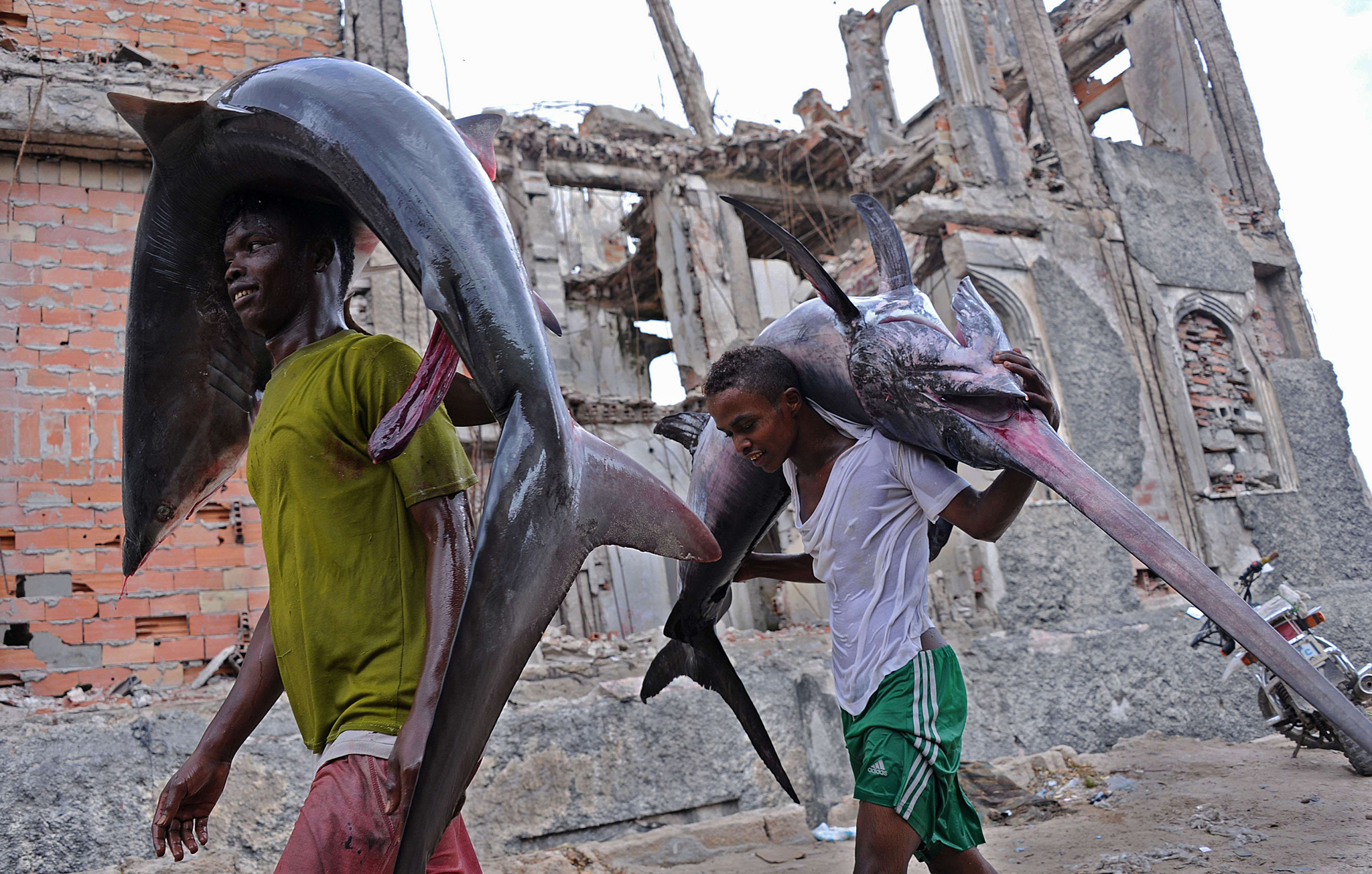 Porters carry a shark (L) and a Marlin (R) to the local market in Hamarweyne near the port of Mogadishu, Somalia.