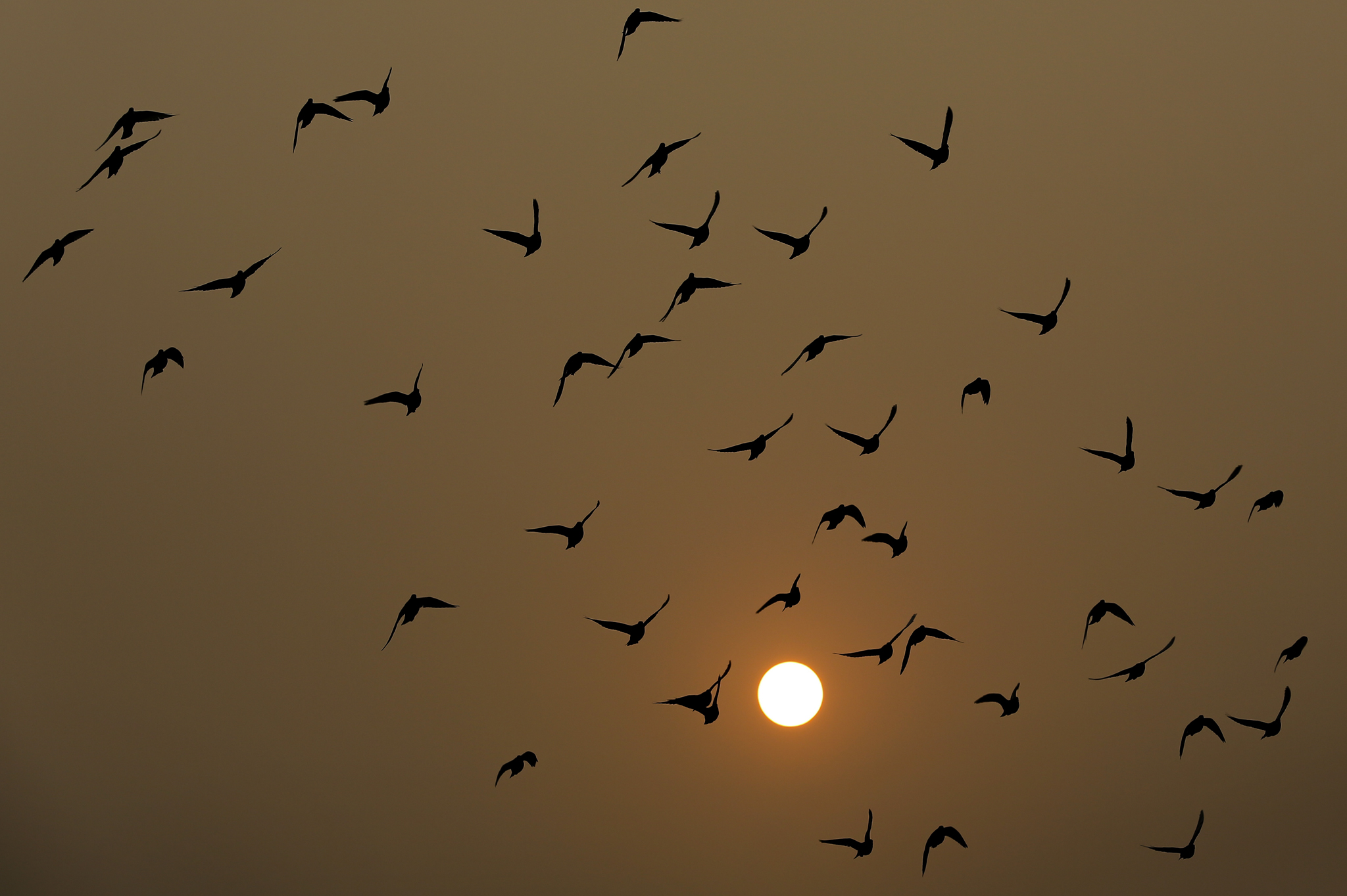 Birds fly as the sun sets through haze in Beijing