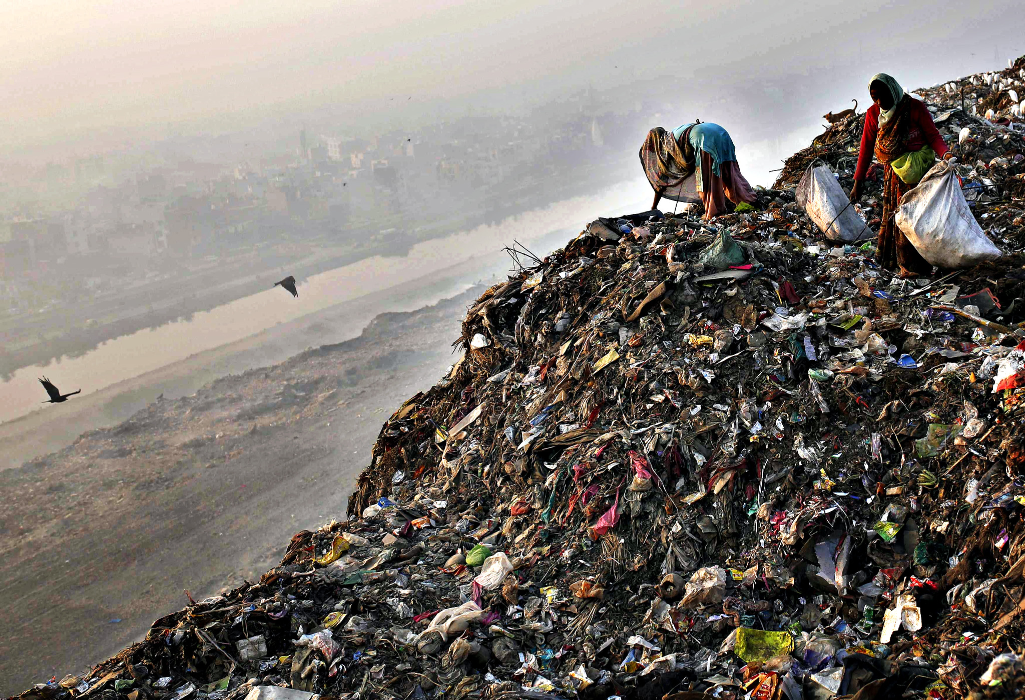 Rag pickers collect recyclable material at a garbage dump in New Delhi...Rag pickers collect recyclable material at a garbage dump in New Delhi November 19, 2014.