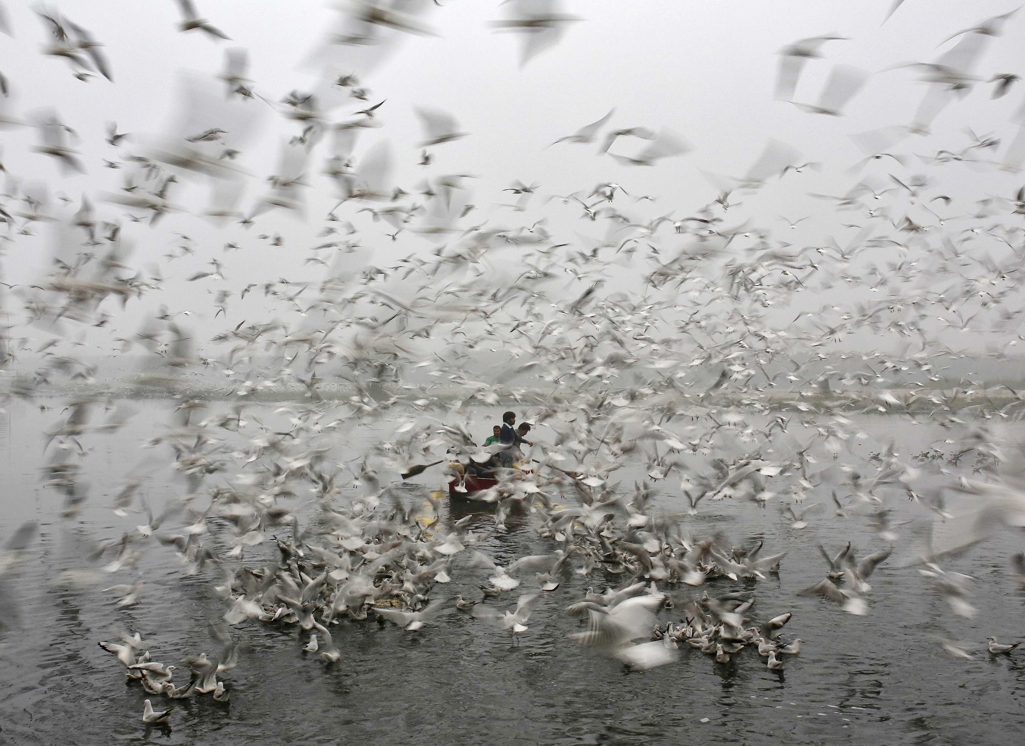 Men ride a boat as seagulls fly over the waters of the river Yamuna in New Delhi...Men ride a boat as seagulls fly over the waters of the river Yamuna on a cold, winter morning in New Delhi December 18, 2014. REUTERS/Ahmad Masood (INDIA - Tags: ANIMALS SOCIETY ENVIRONMENT)