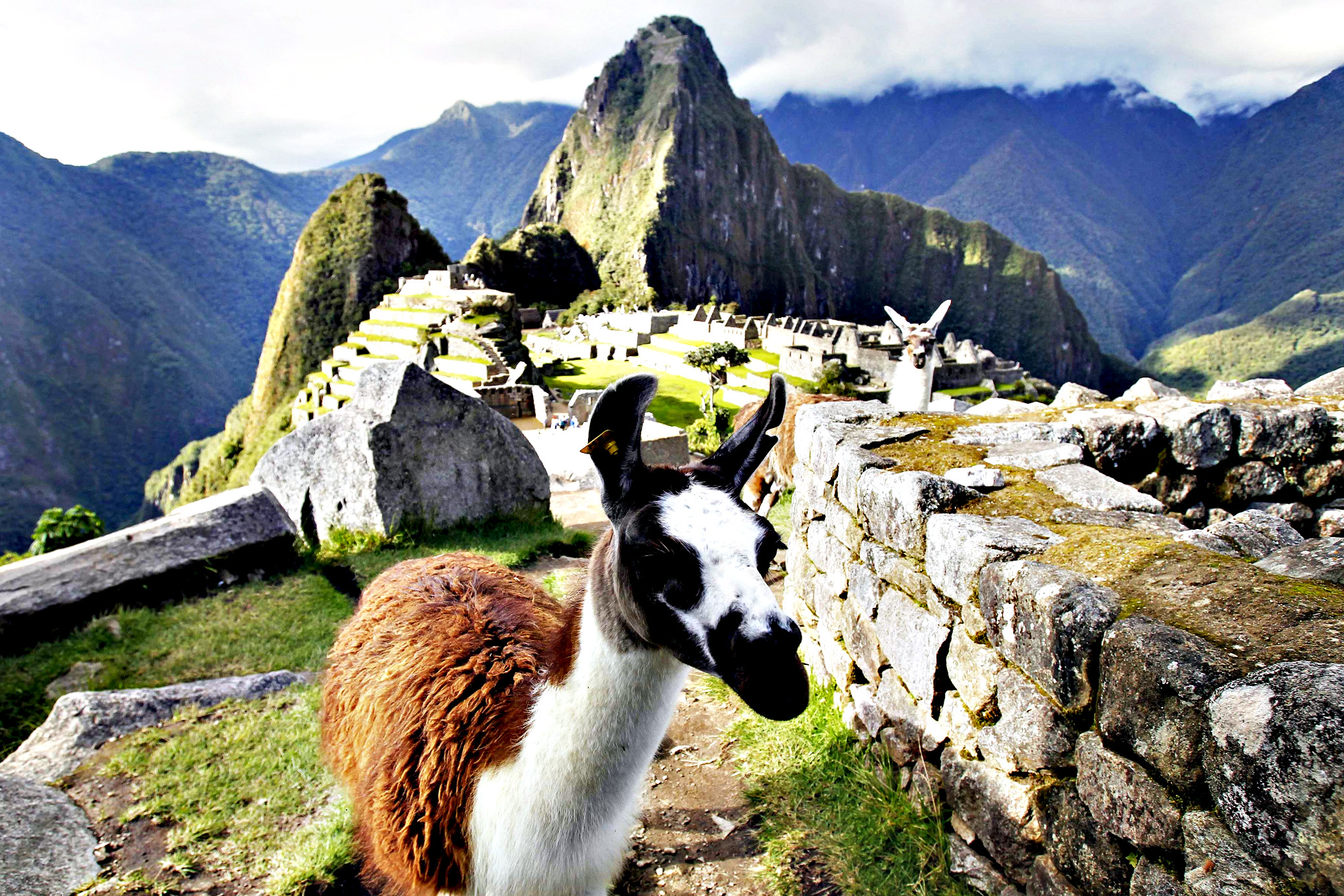 Llamas are seen in front of the Inca citadel of Machu Picchu in Cusco. Machu Picchu, a UNESCO World Heritage Site, is Peru's top tourist attraction, with the government limiting tourists to 2,500 per day due to safety reasons and concerns over the preservation of the ruins.