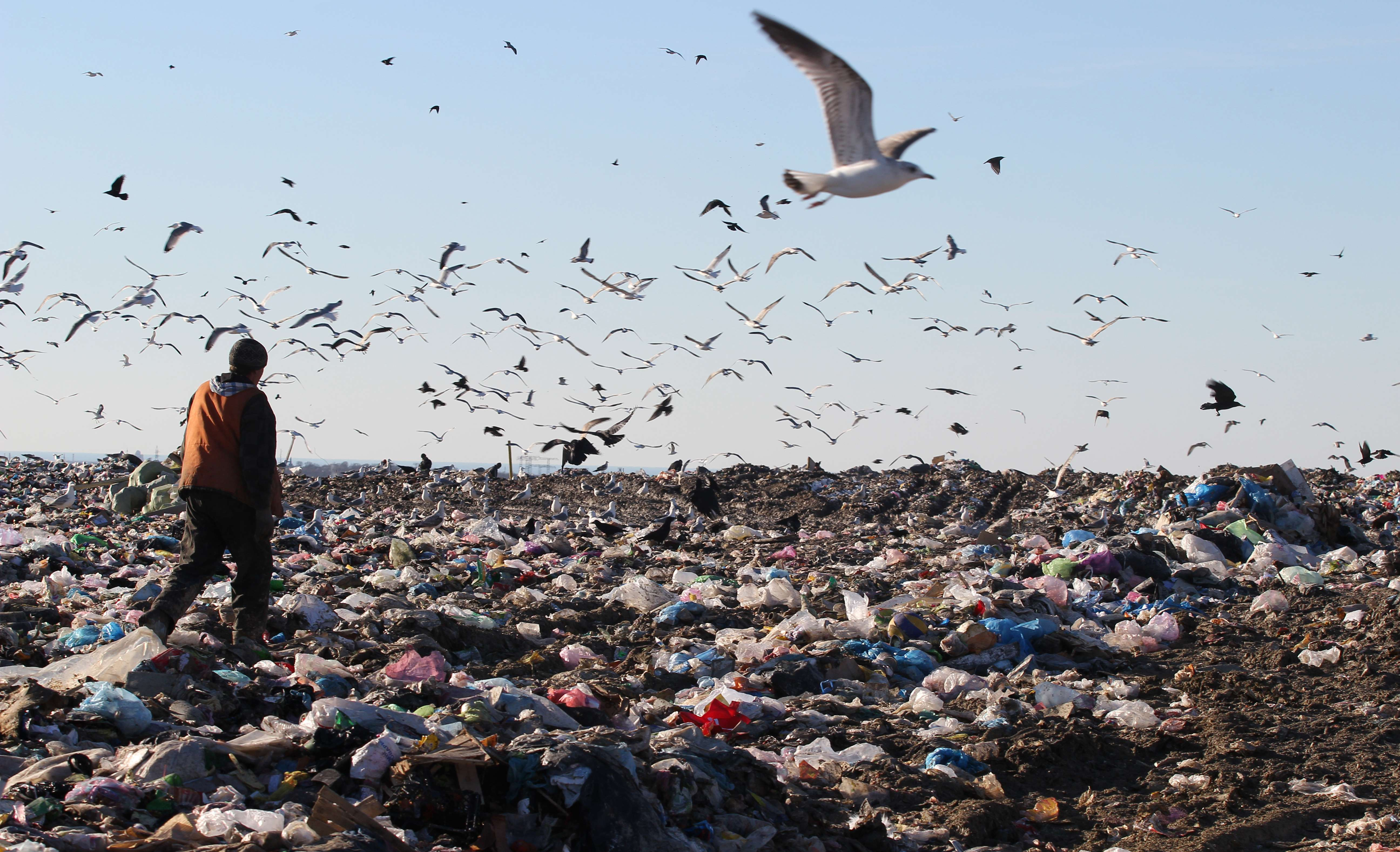 TOPSHOTS A man walks through heaps of wa...TOPSHOTS A man walks through heaps of waste as seagulls flock over a garbage dump in the Crimean city of Sevastopol on January 13, 2015. AFP PHOTO / YURI LASHOVYURI LASHOV/AFP/Getty Images