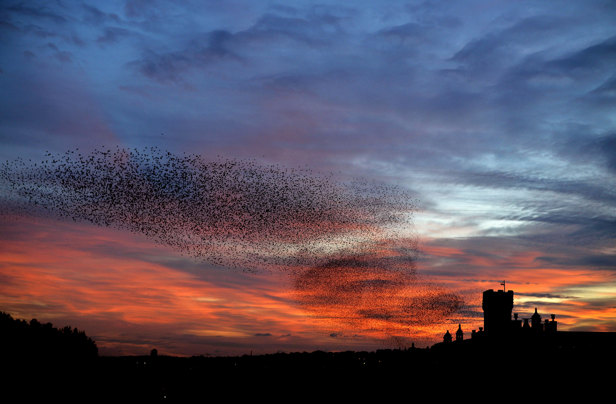 TOPSHOTS Starlings fly in the sky of Rom...TOPSHOTS Starlings fly in the sky of Rome at sunset on January 27, 2015.  AFP PHOTO / FILIPPO MONTEFORTEFILIPPO MONTEFORTE/AFP/Getty Images